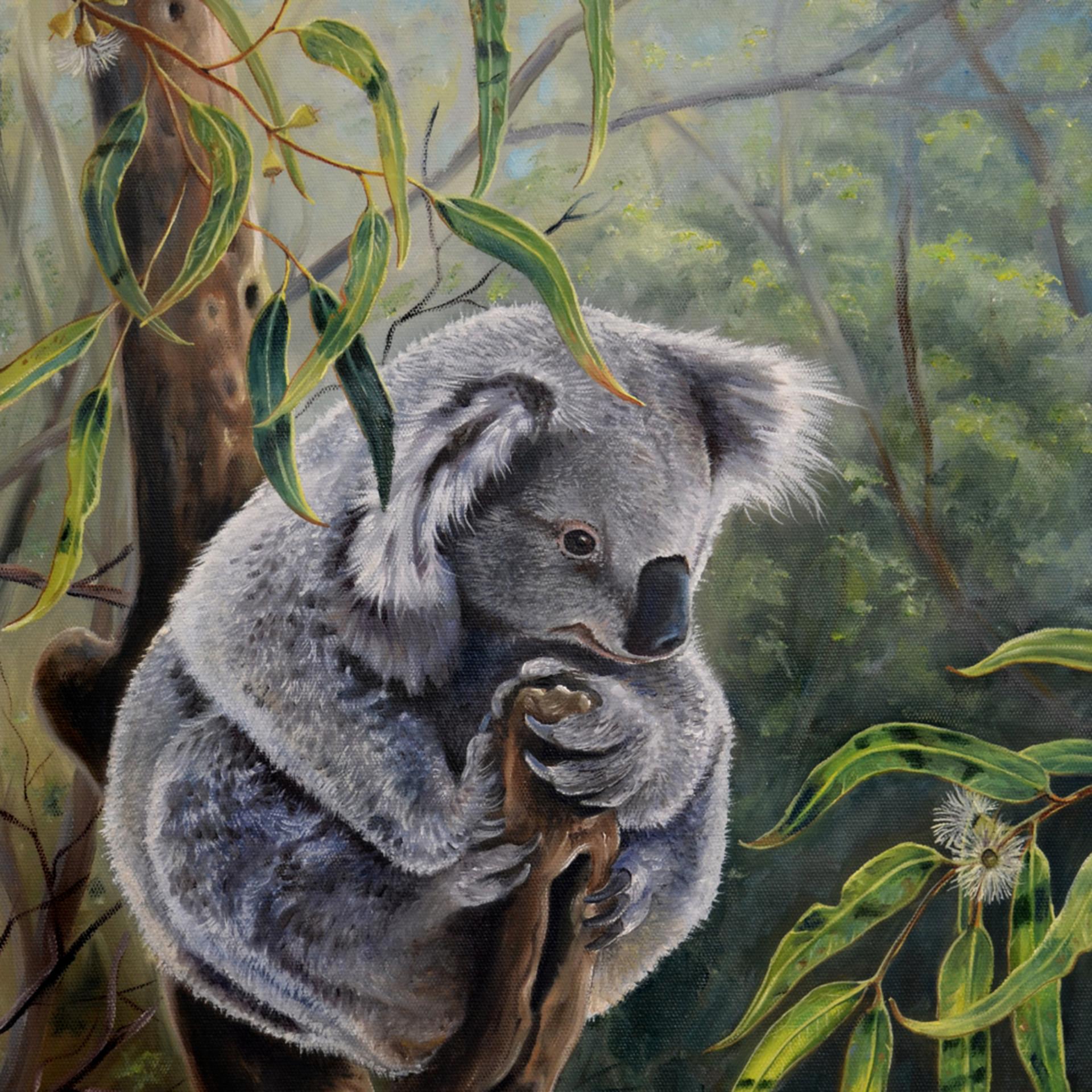 Koala amongstthegumleavesebg 1932socialmedia 2 edilbt