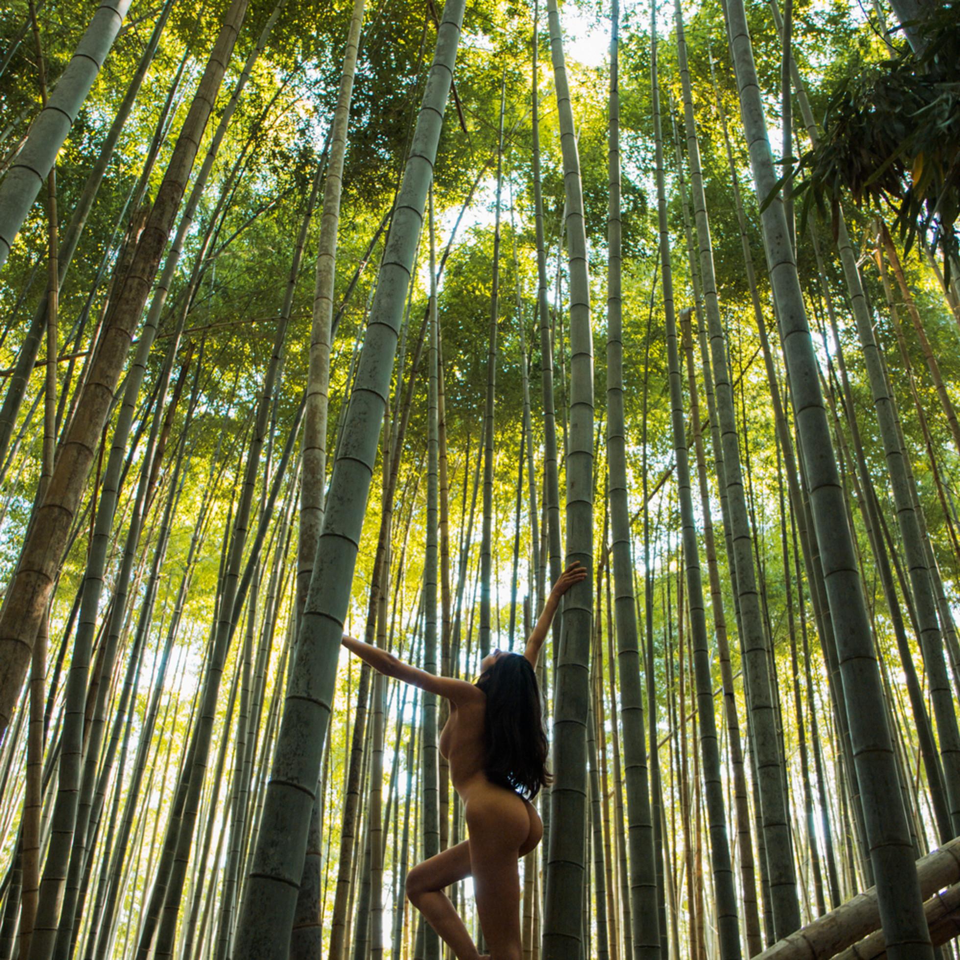 Bamboo ueoxn4