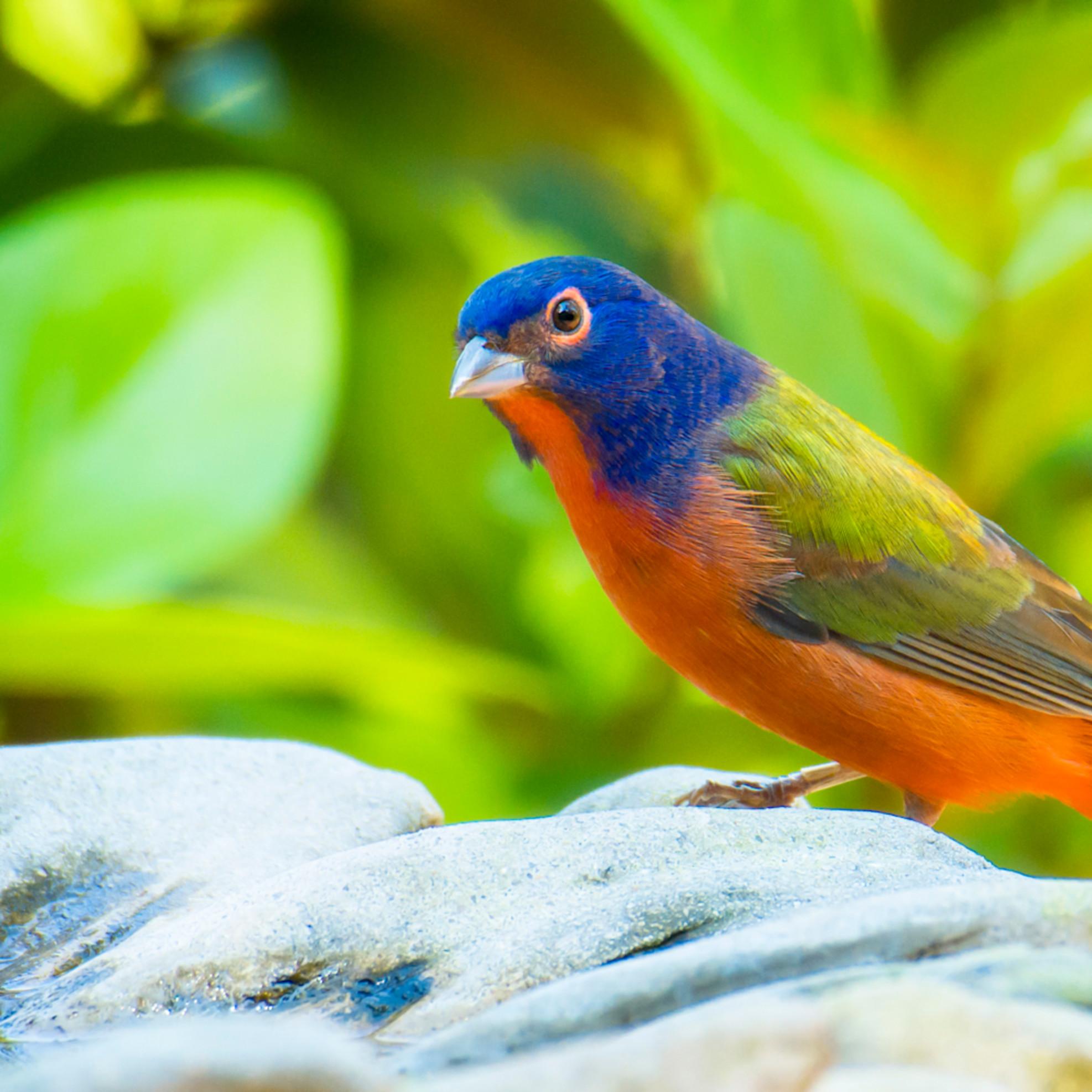 By birds 20201008 0039 gekrrq