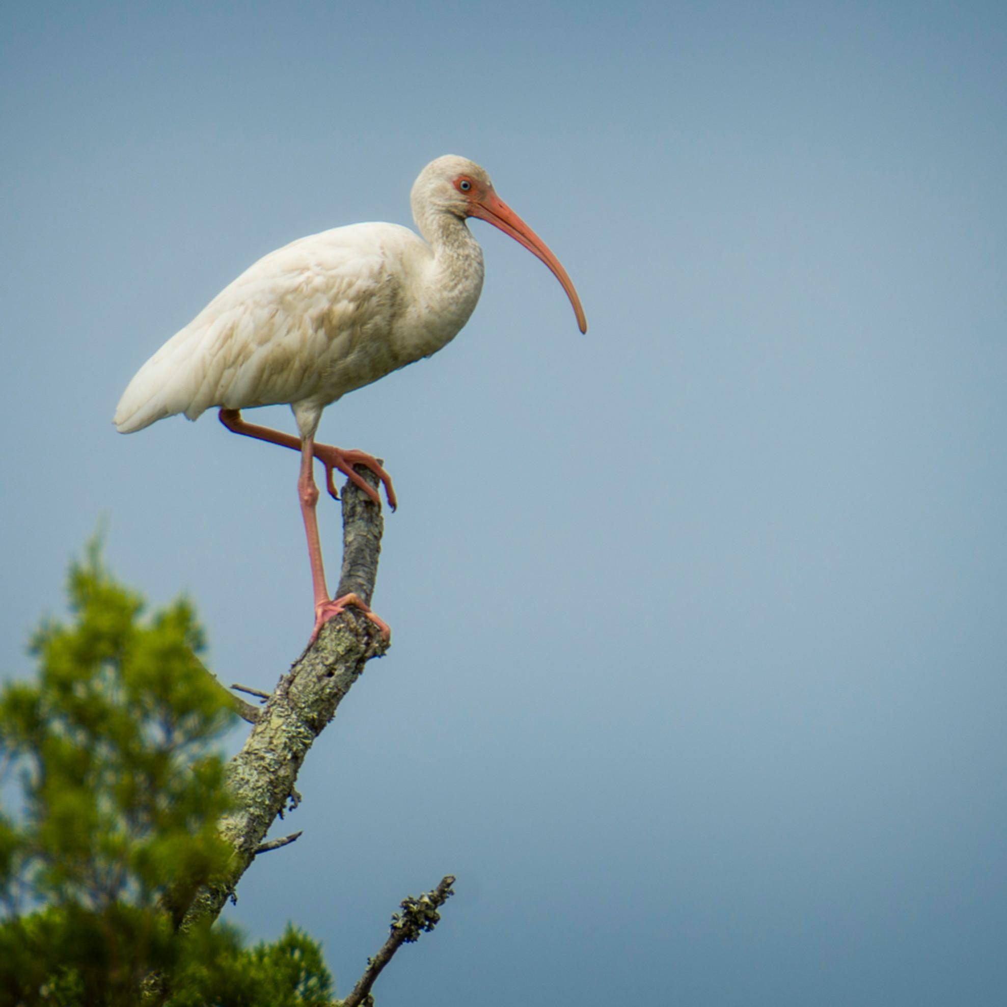 Audubon pond 20200919 0306 xmtz8z