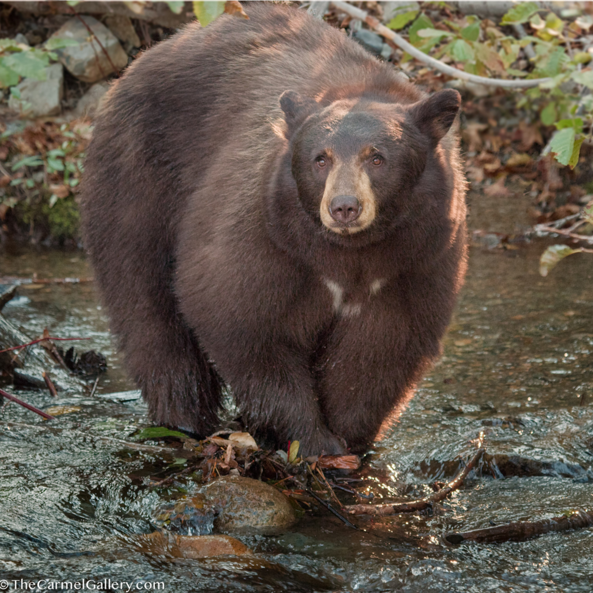 Bear1sh oyyo10