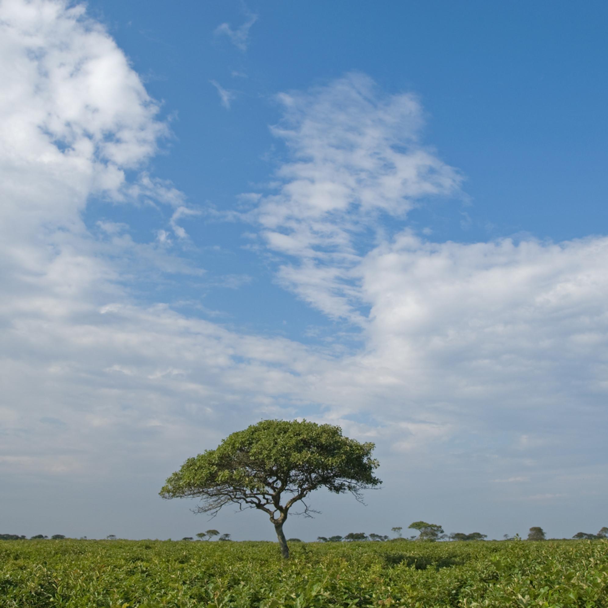 Moors tree kn bkazck