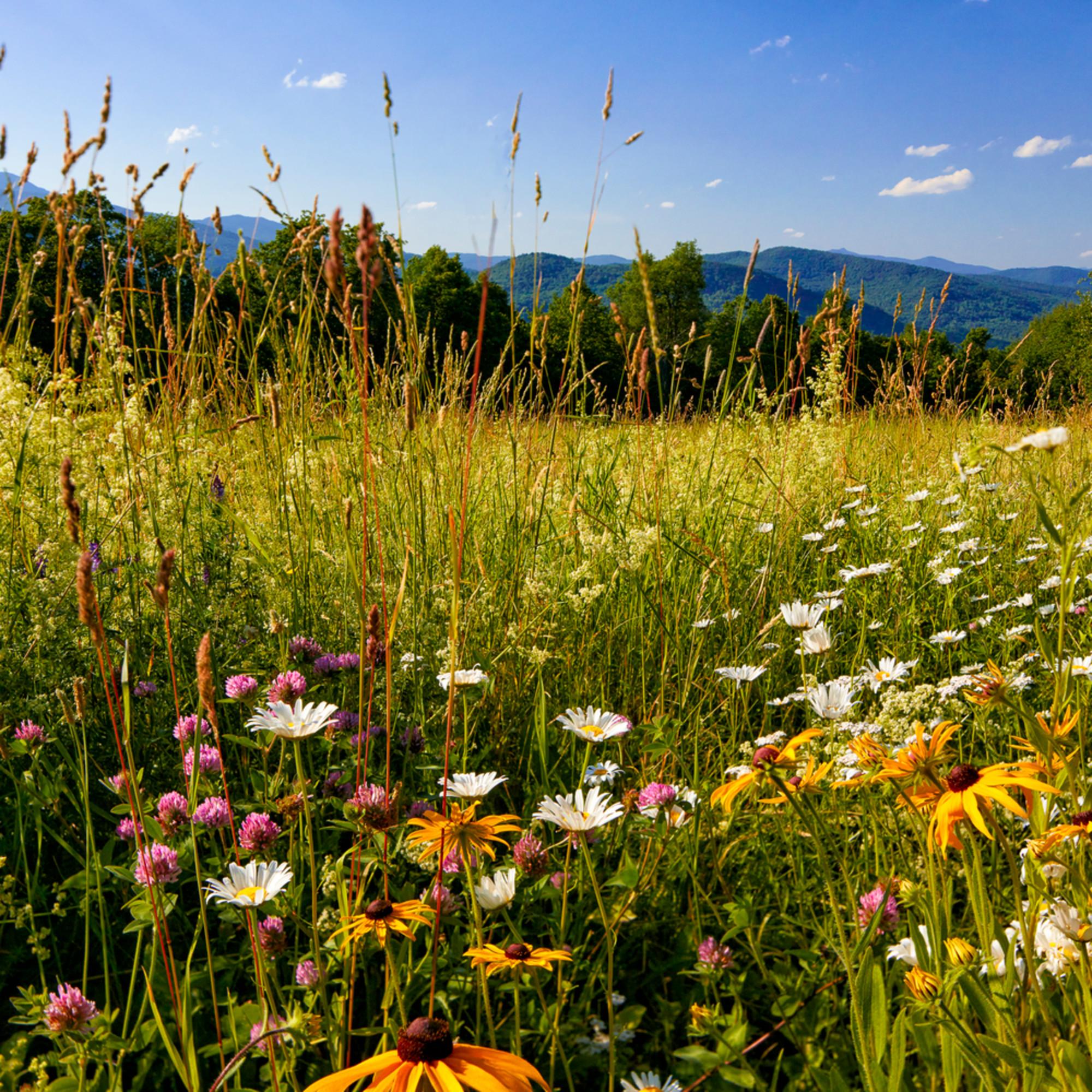 Fuller hill wildflowers delta 3x2  ne9zxp