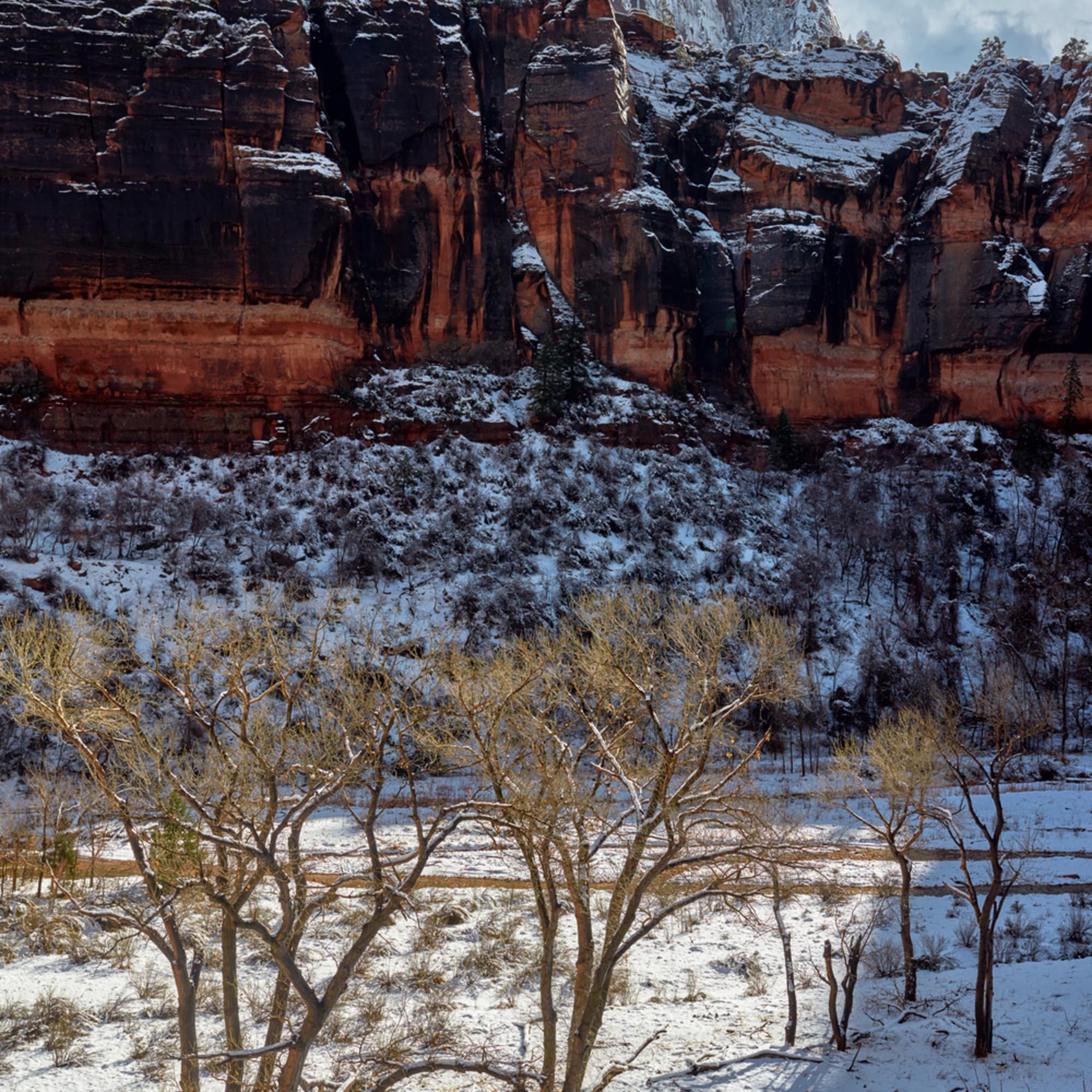Sunlit trees in a snowy virgin river meadow 4x5 nwbm14