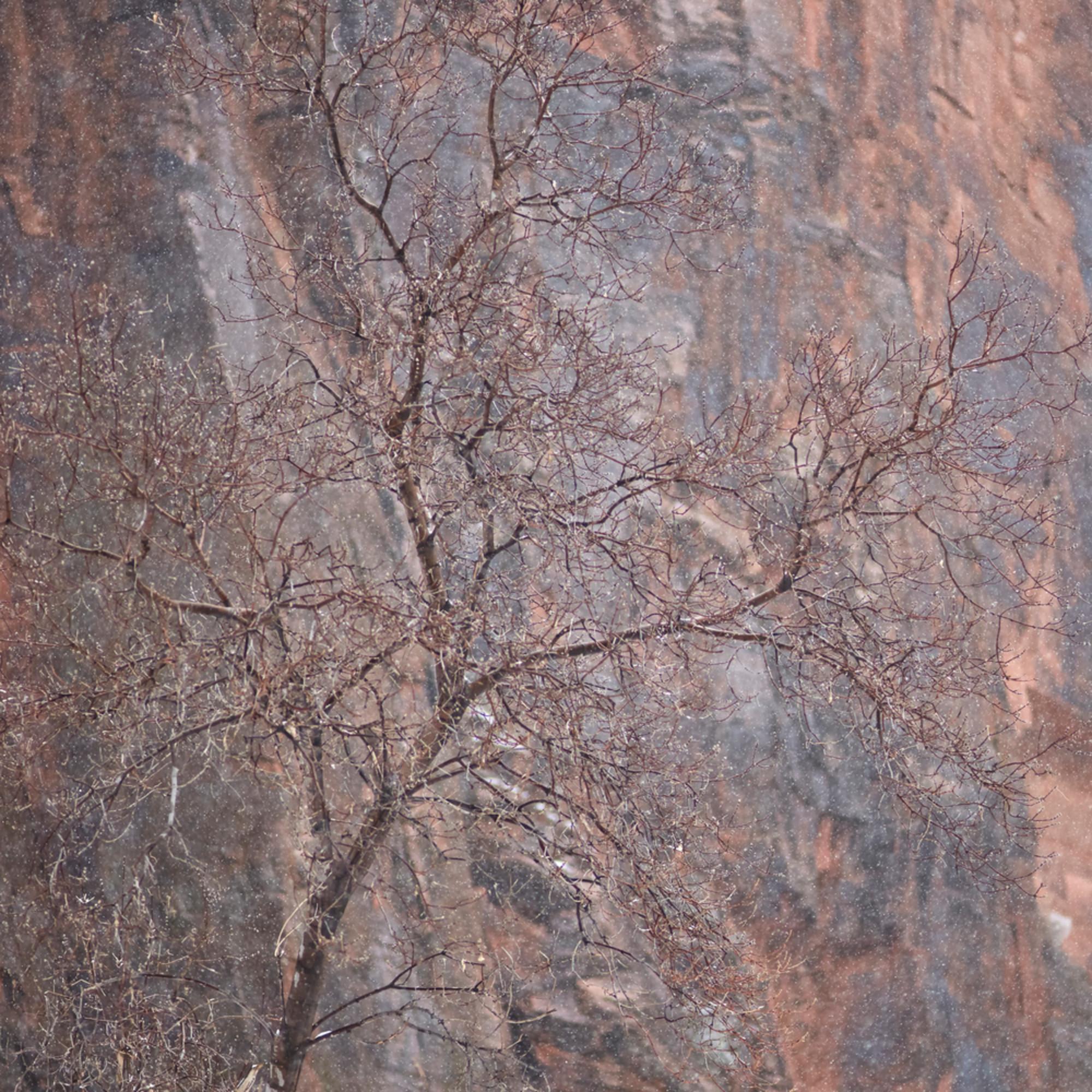 Sinawava tree charlie 4x5 njzysh
