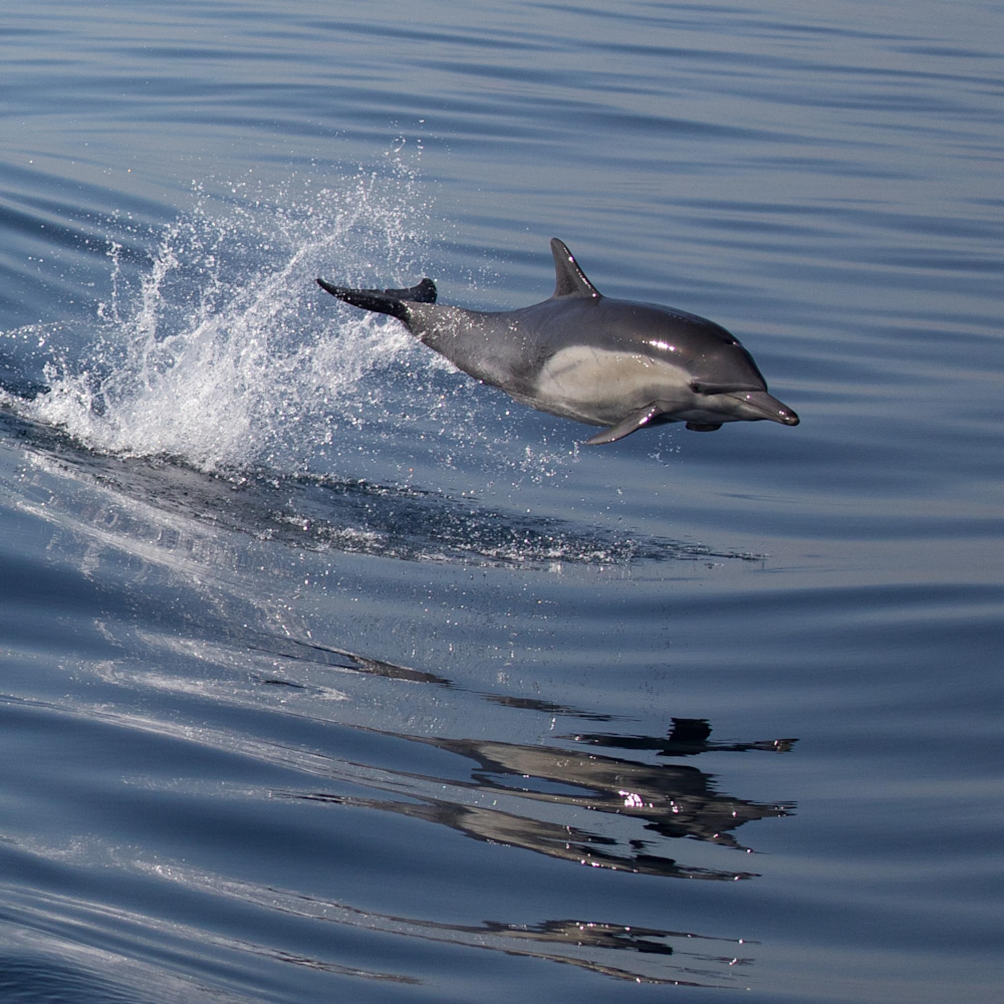 Dolphin leap2 rtpb7w