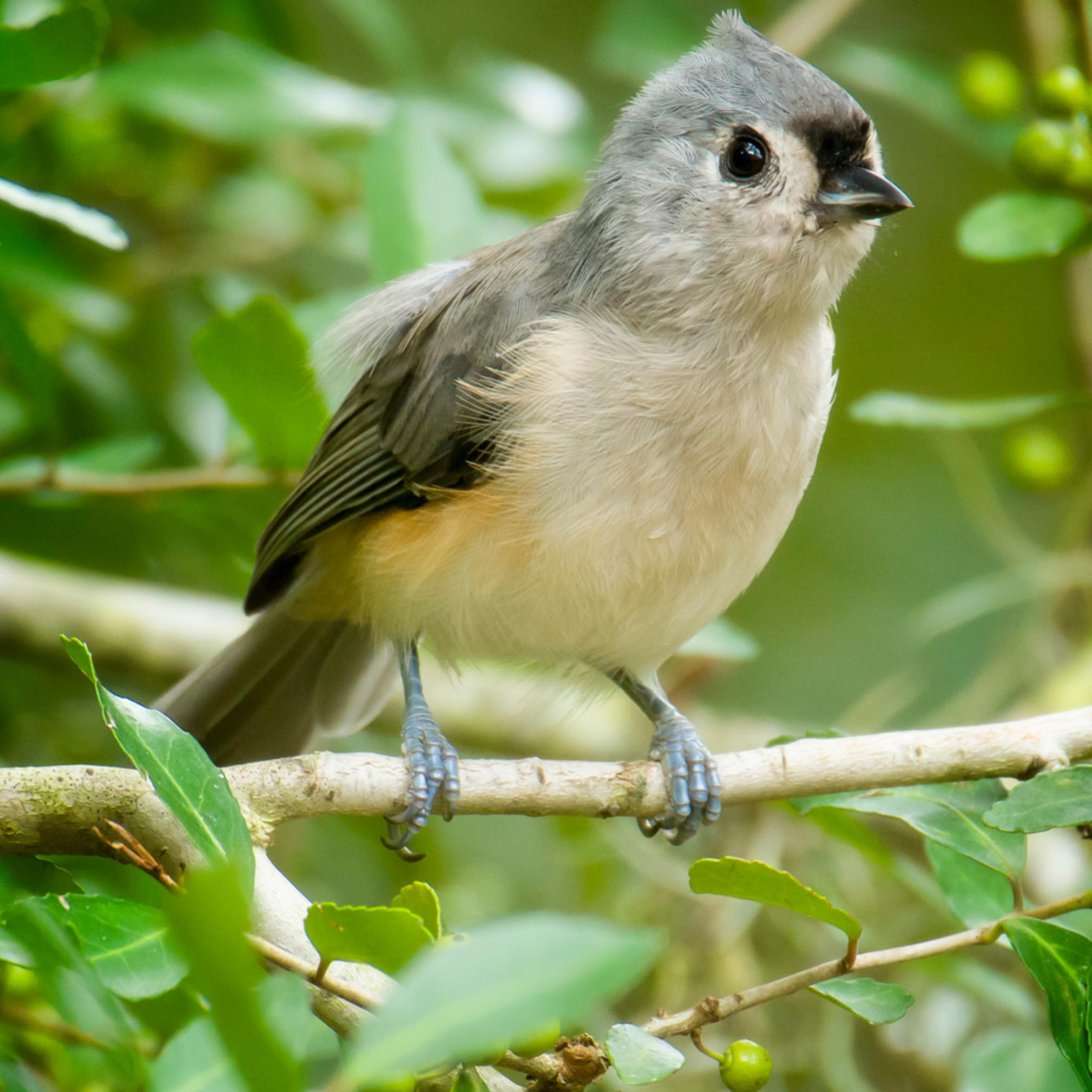 Audubon pond 20200918 0385 jbbklp
