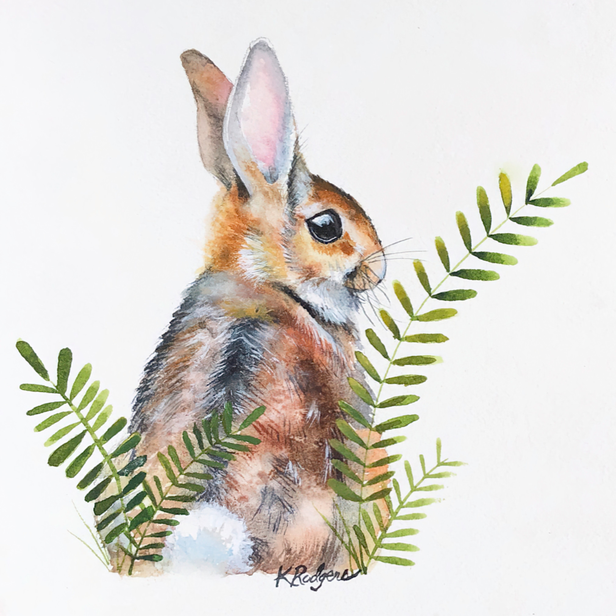 Cottontail2 pifxl5