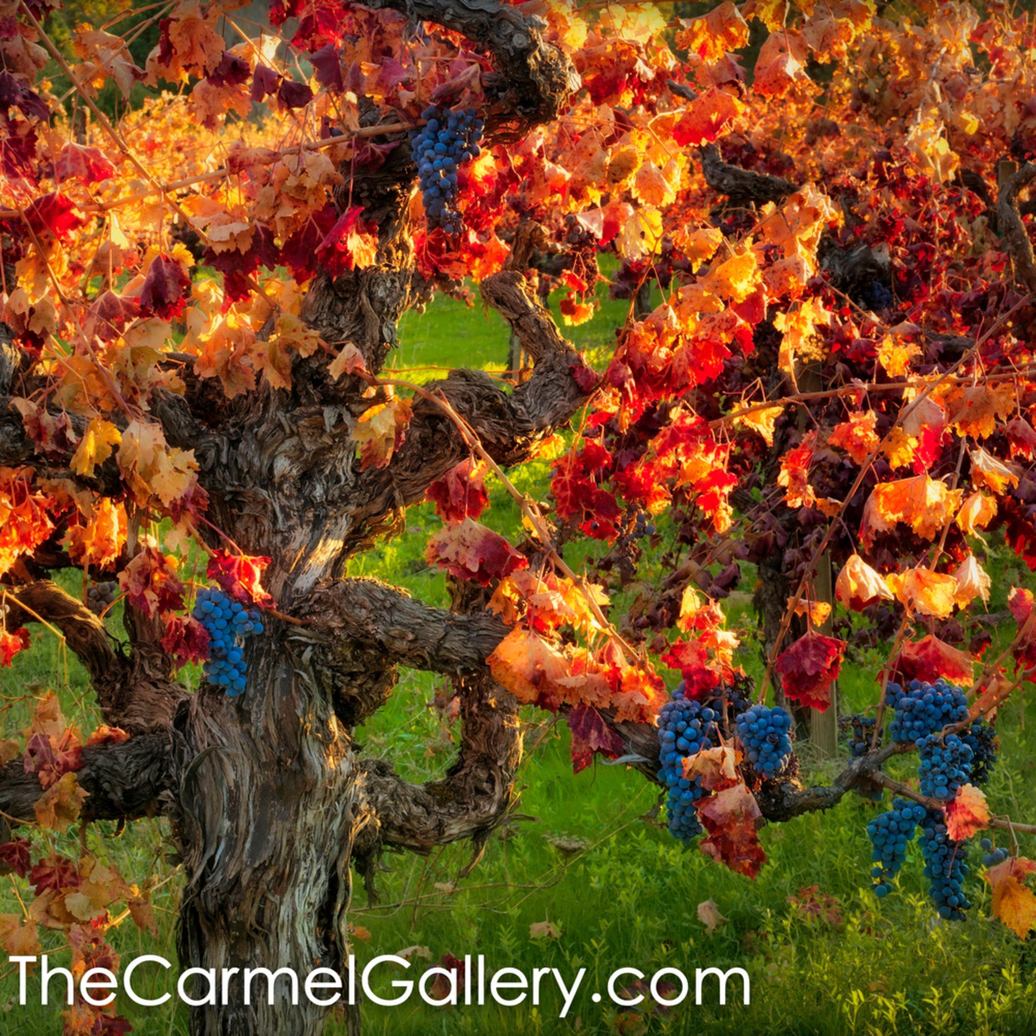 Ancient vines n3mkku