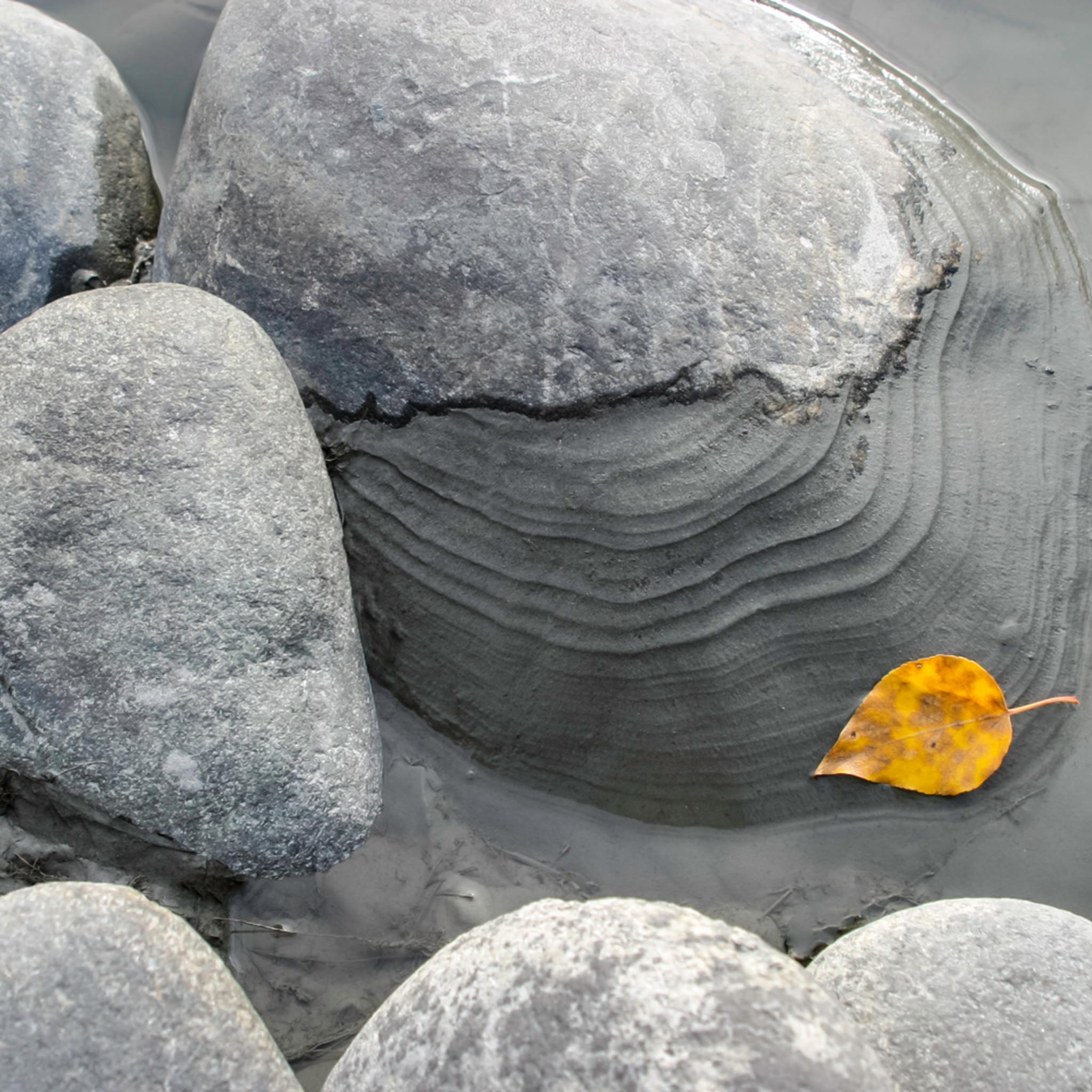 Grey rock orange leaf master xtb73h