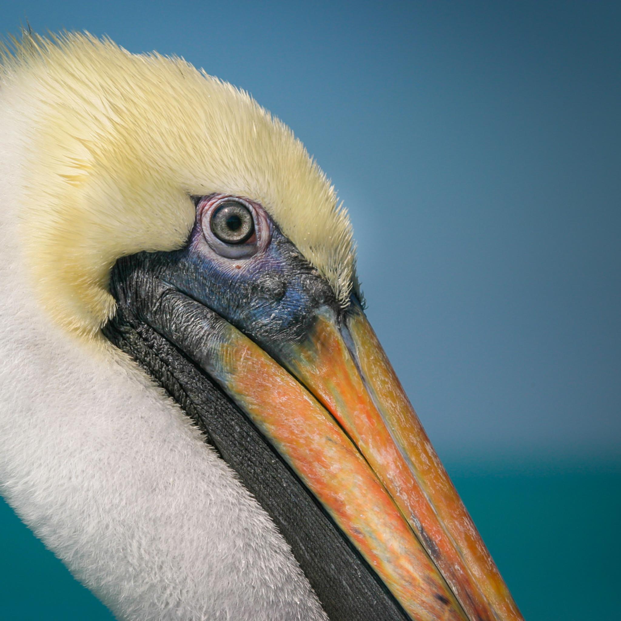 Pelican 01 xdvt3g