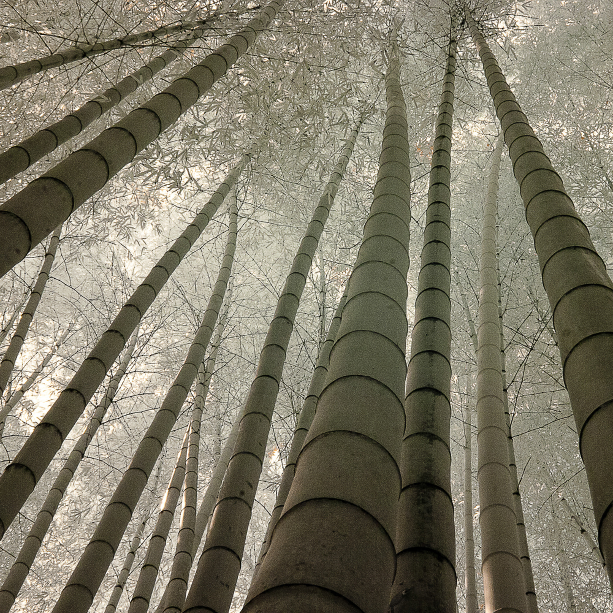 Bamboo garden japan mkrmou