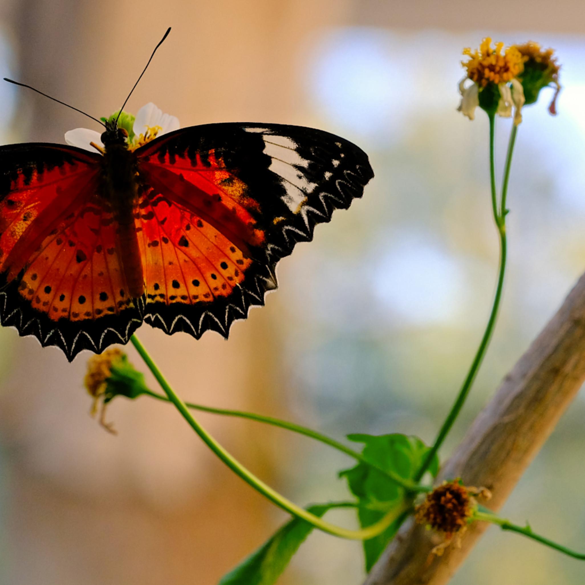 Flowers and butterflies 62 nptjxv