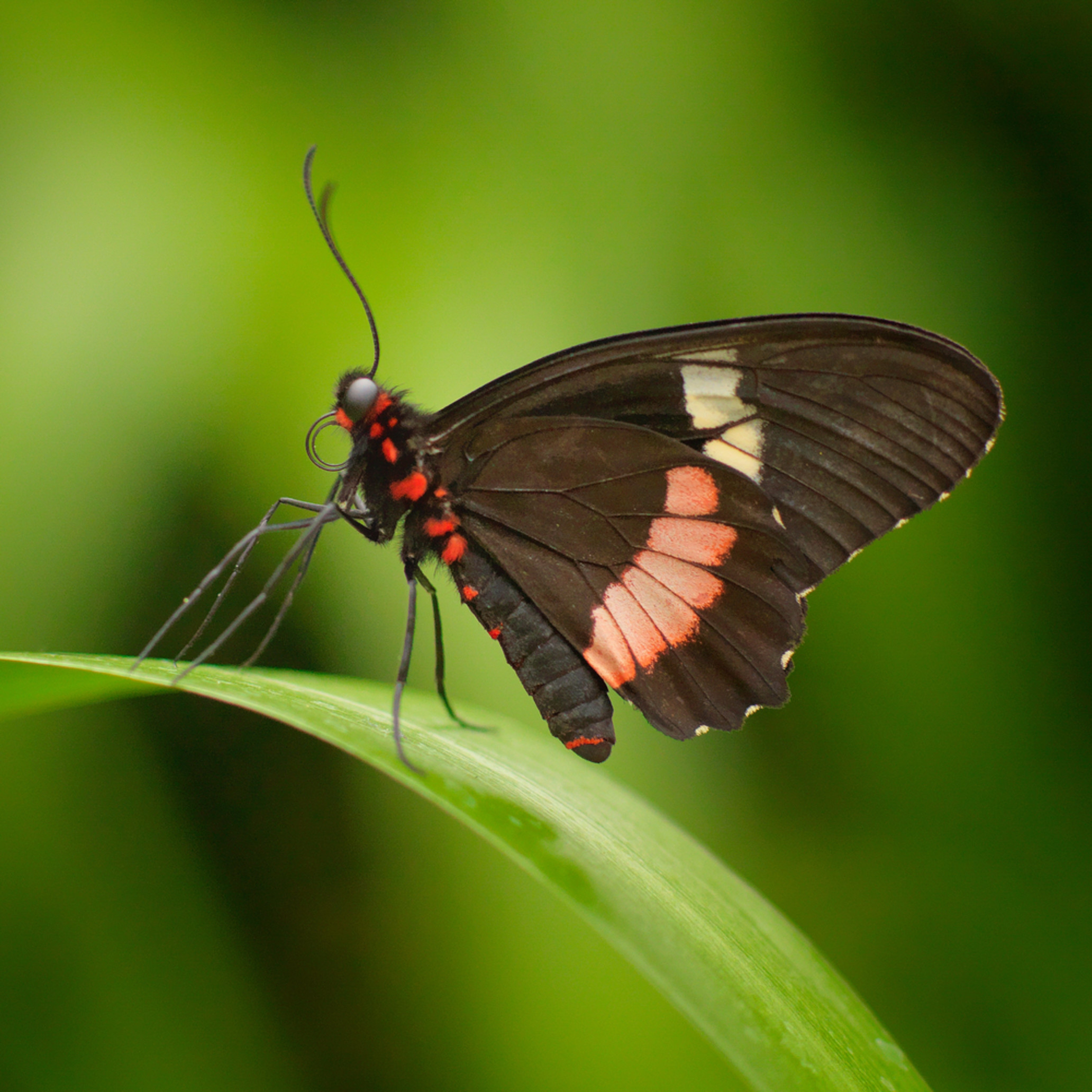 Rainforest butterfly mrqsrk