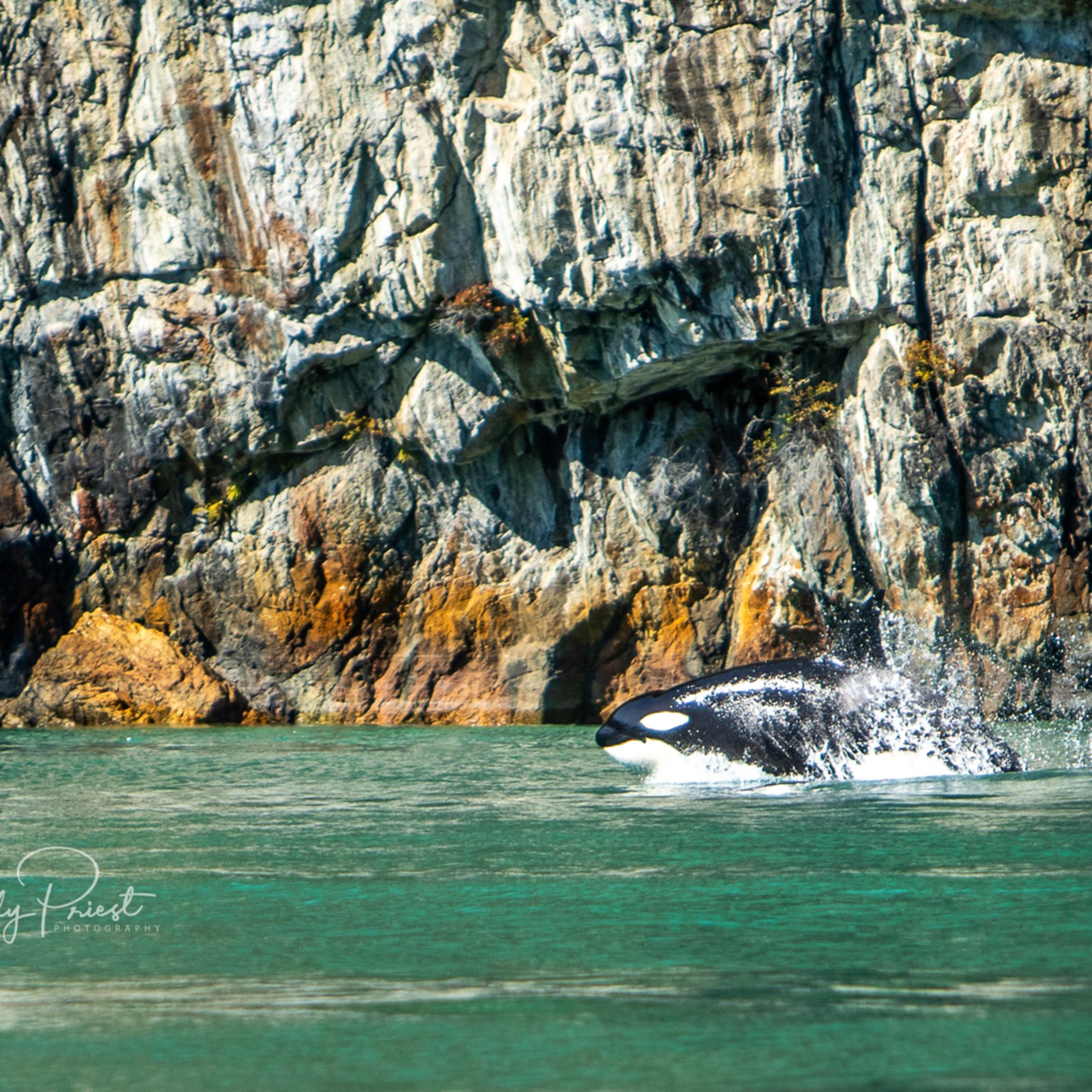 2019 09tobainlet orca 7435 lpzj6d