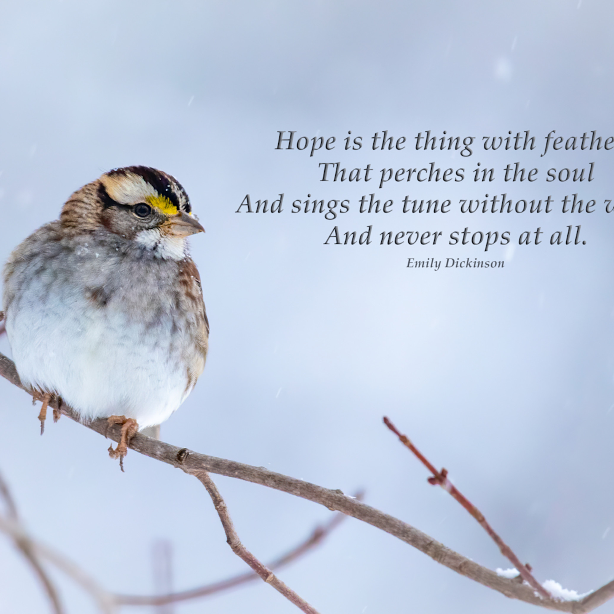 Hope is the thing with feathers czmxor