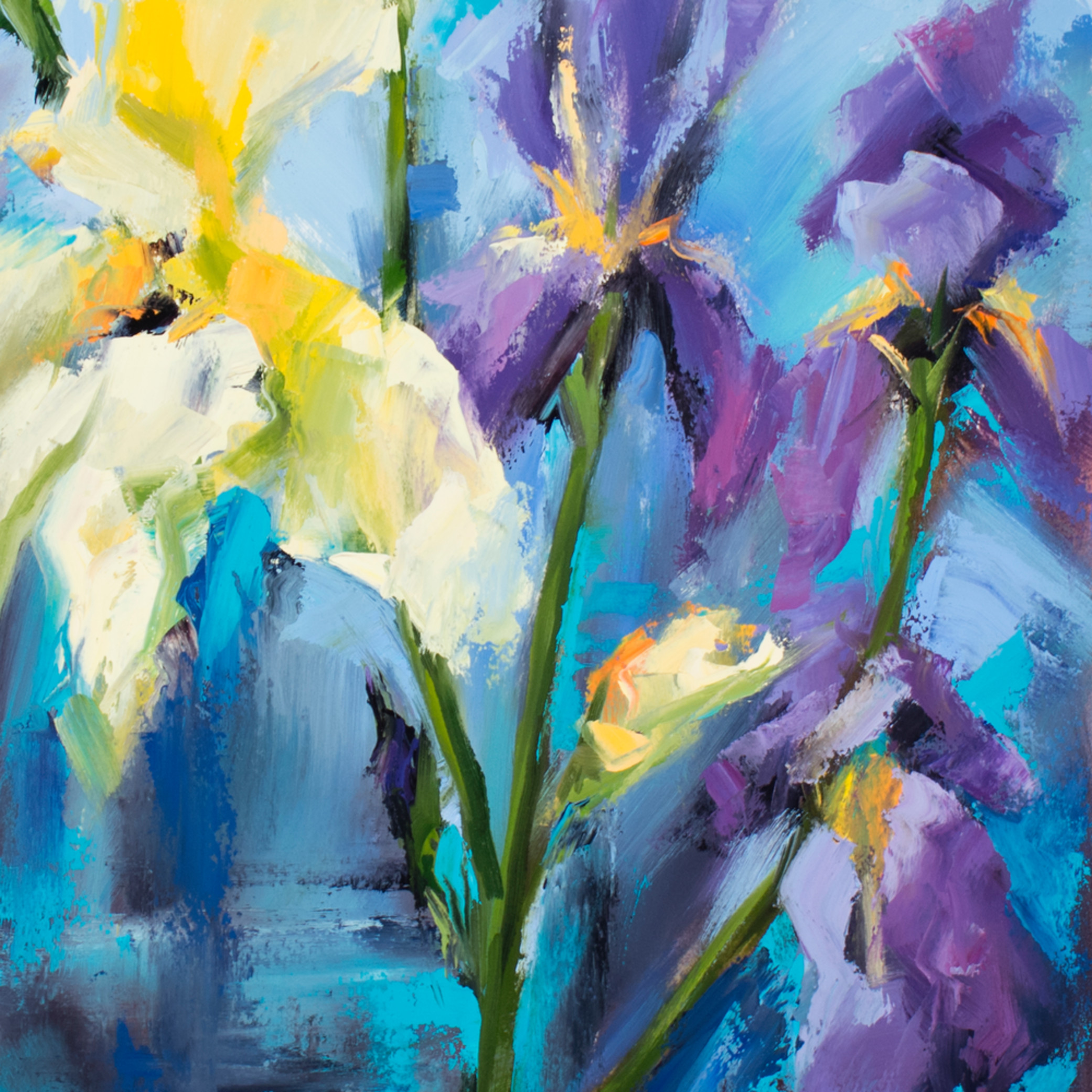 Irises w3cxei