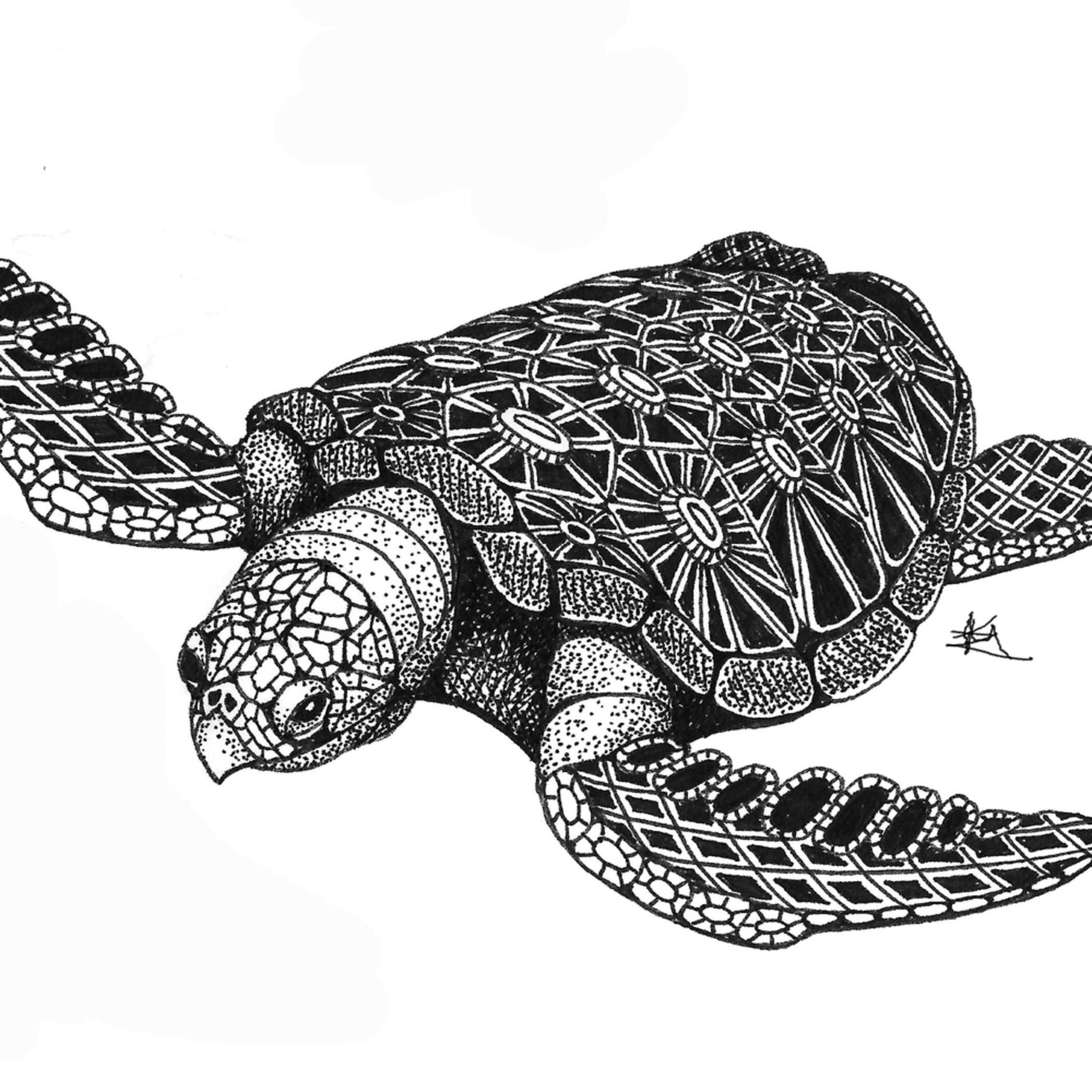 Sea turtle top hnqzuz