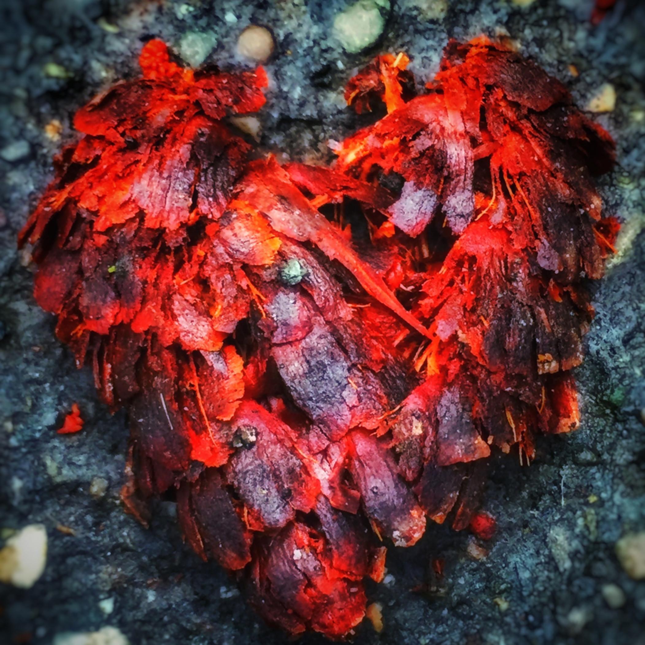 Lion heart img 6818 zwcfsu