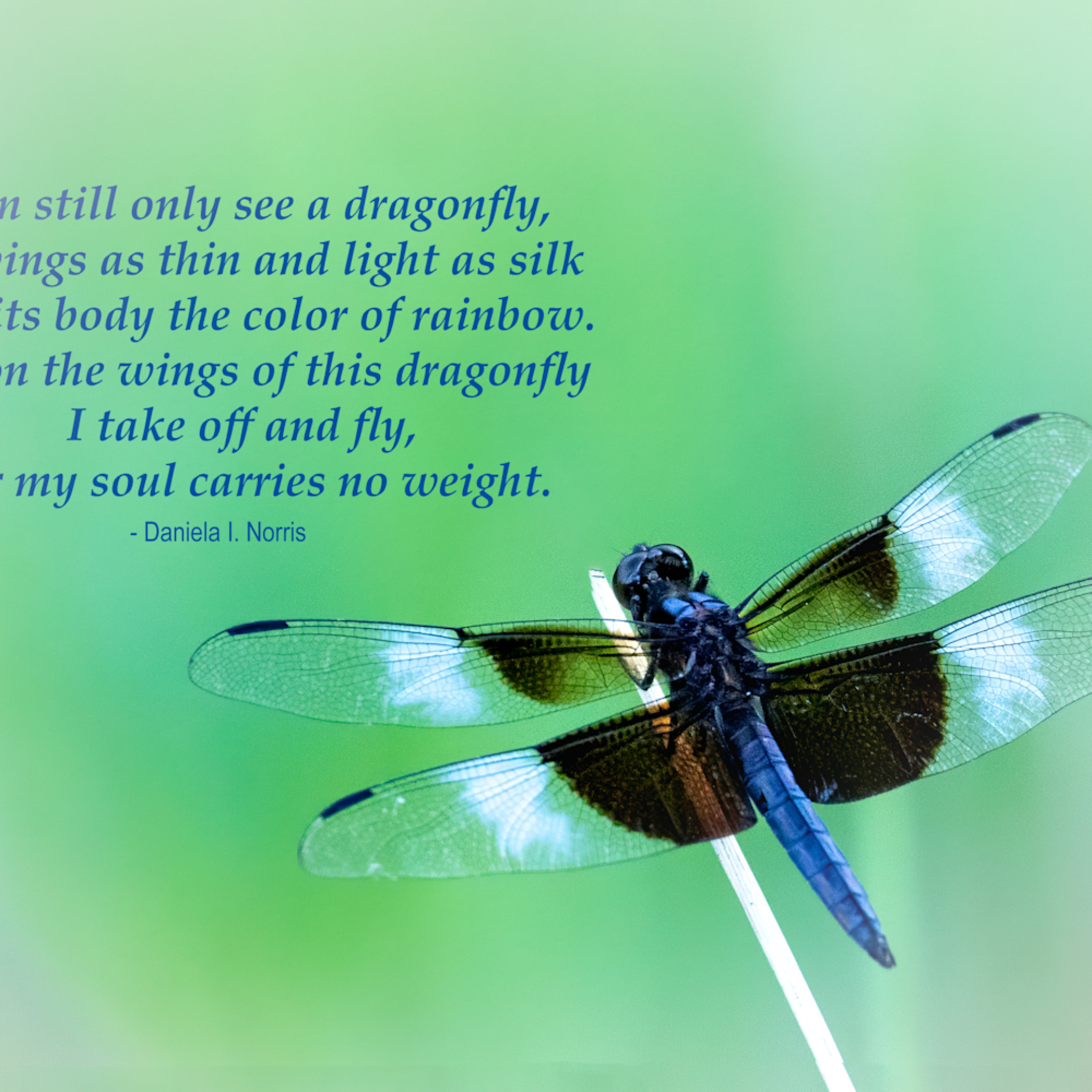 Dragonfly   my soul carries no weight gpbexd