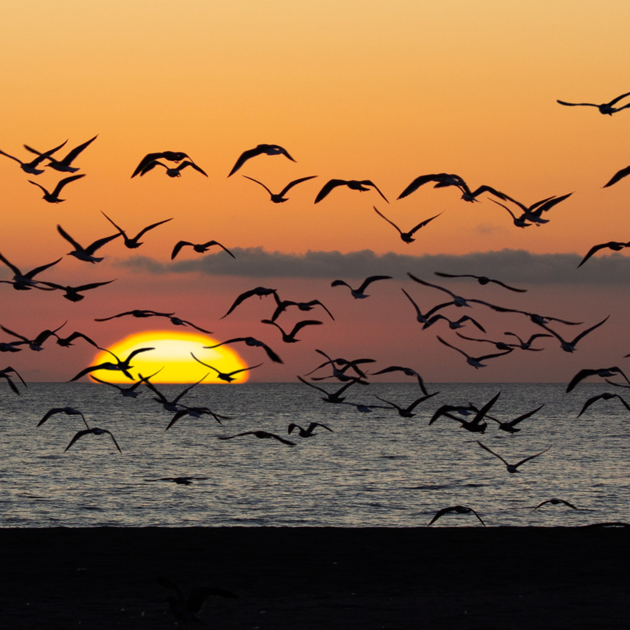 Sunset and gulls oxnard yyljcq