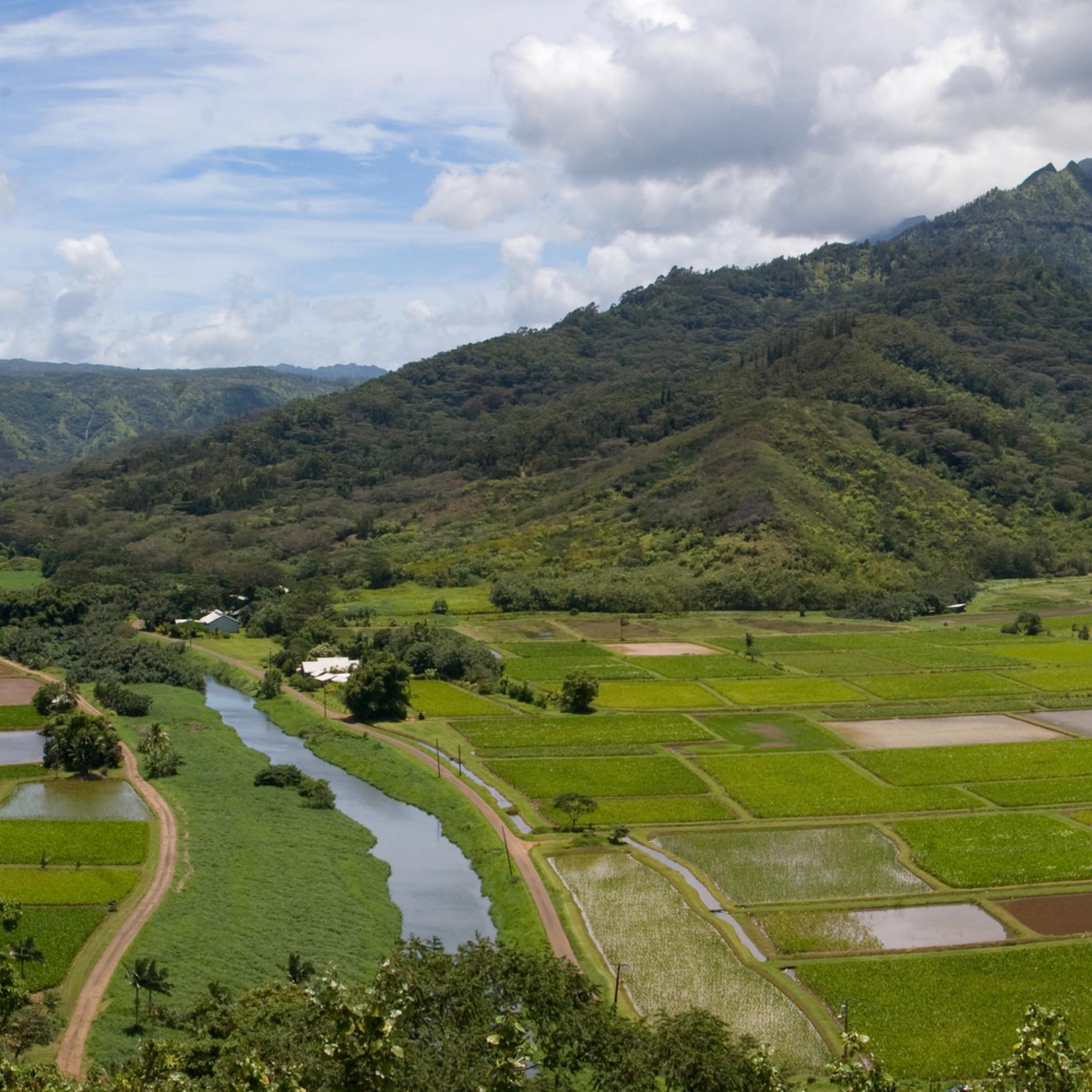 Hanalei valley panorama1 bzb8o0