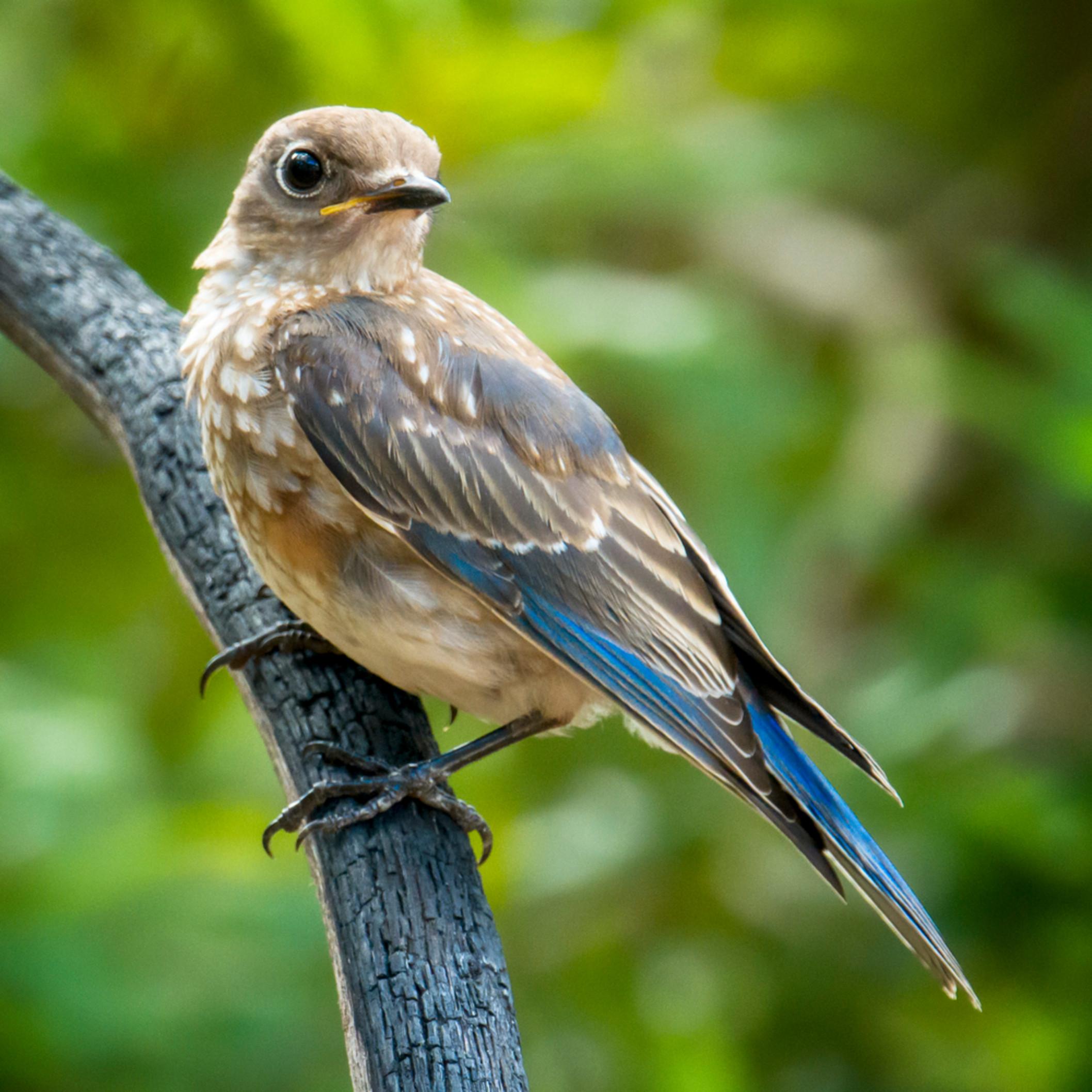 By birds 20200711 1324 cwvjir