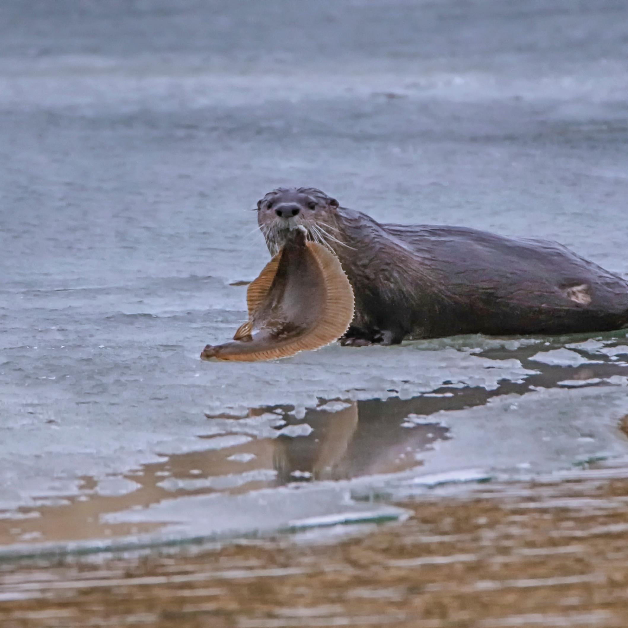 Cape poge sea otter and fluke pepxue