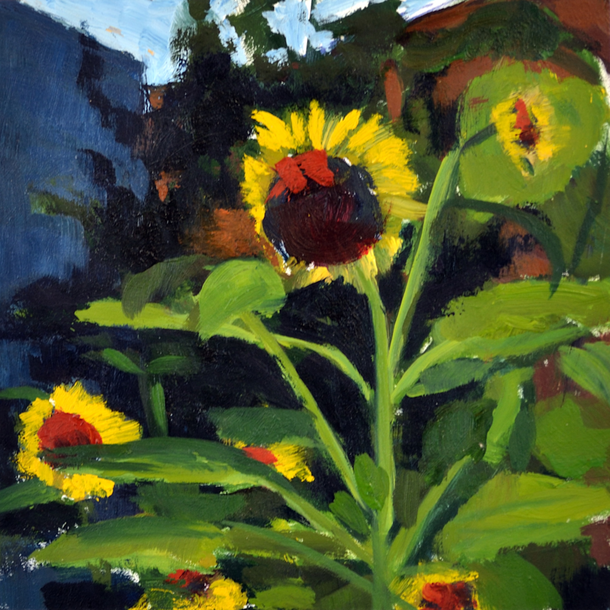 Hallgren minisunflowers 6x6 zwrxh4