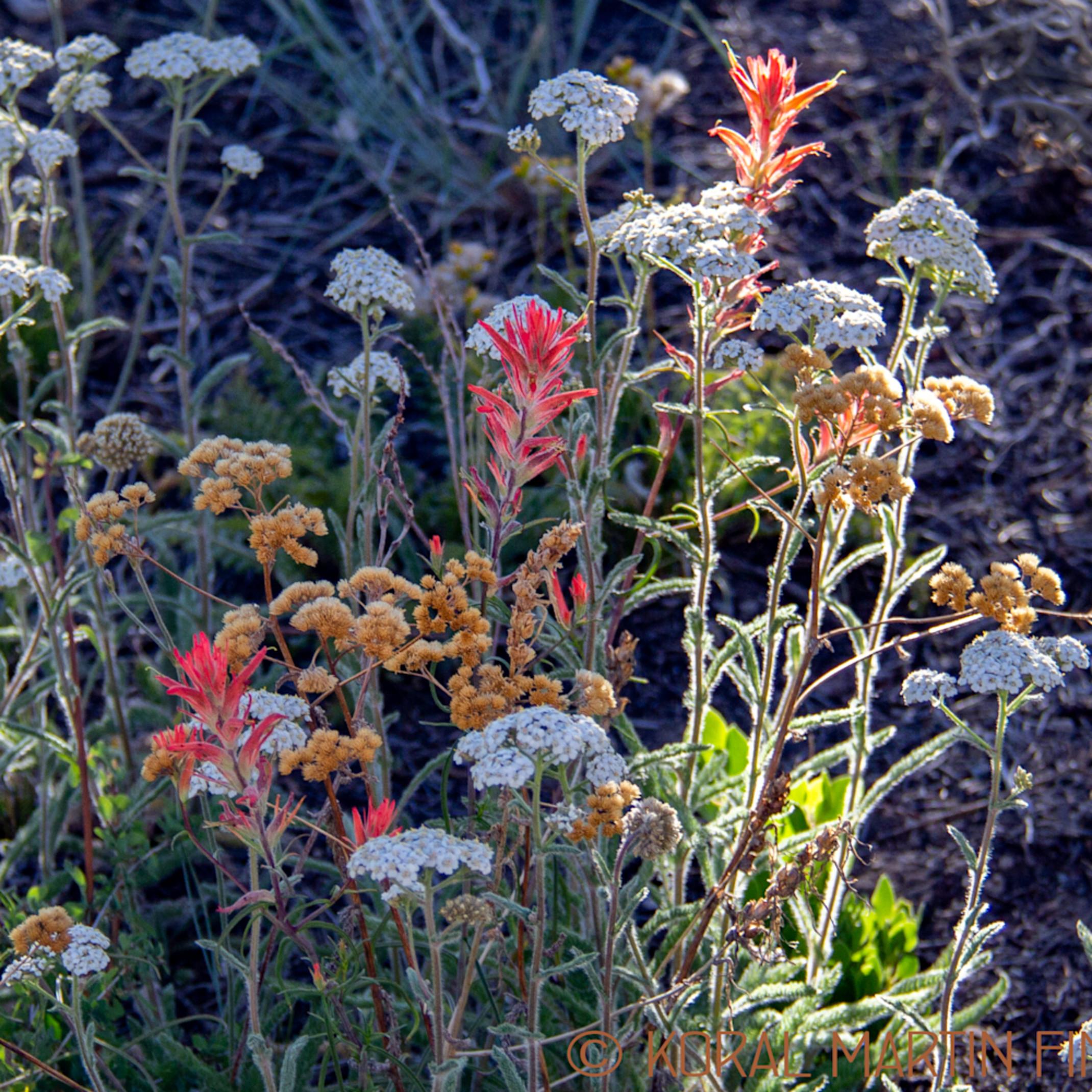 Brycewildflowers 4869 koralmartin rv9wmu