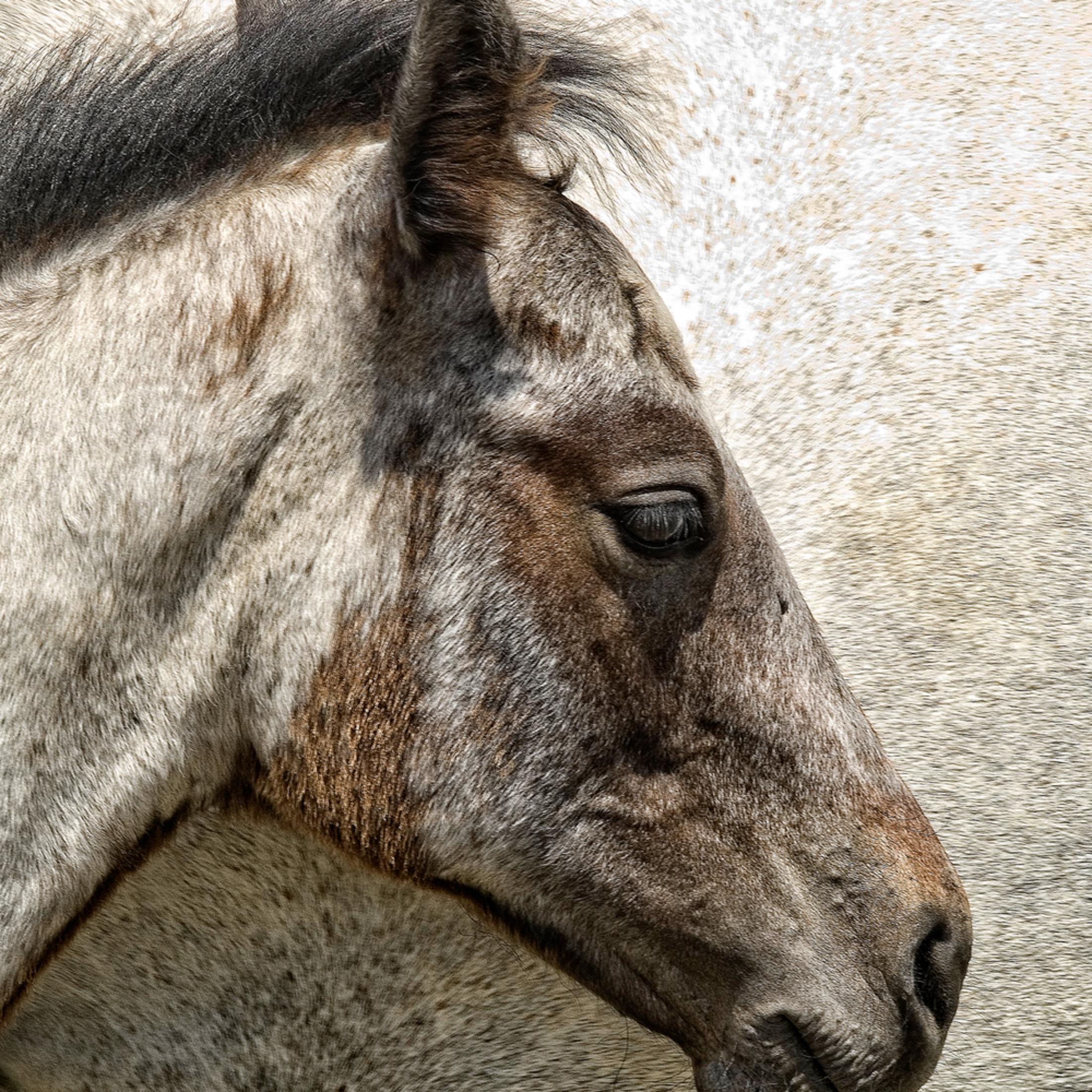 Horsey ws57bd