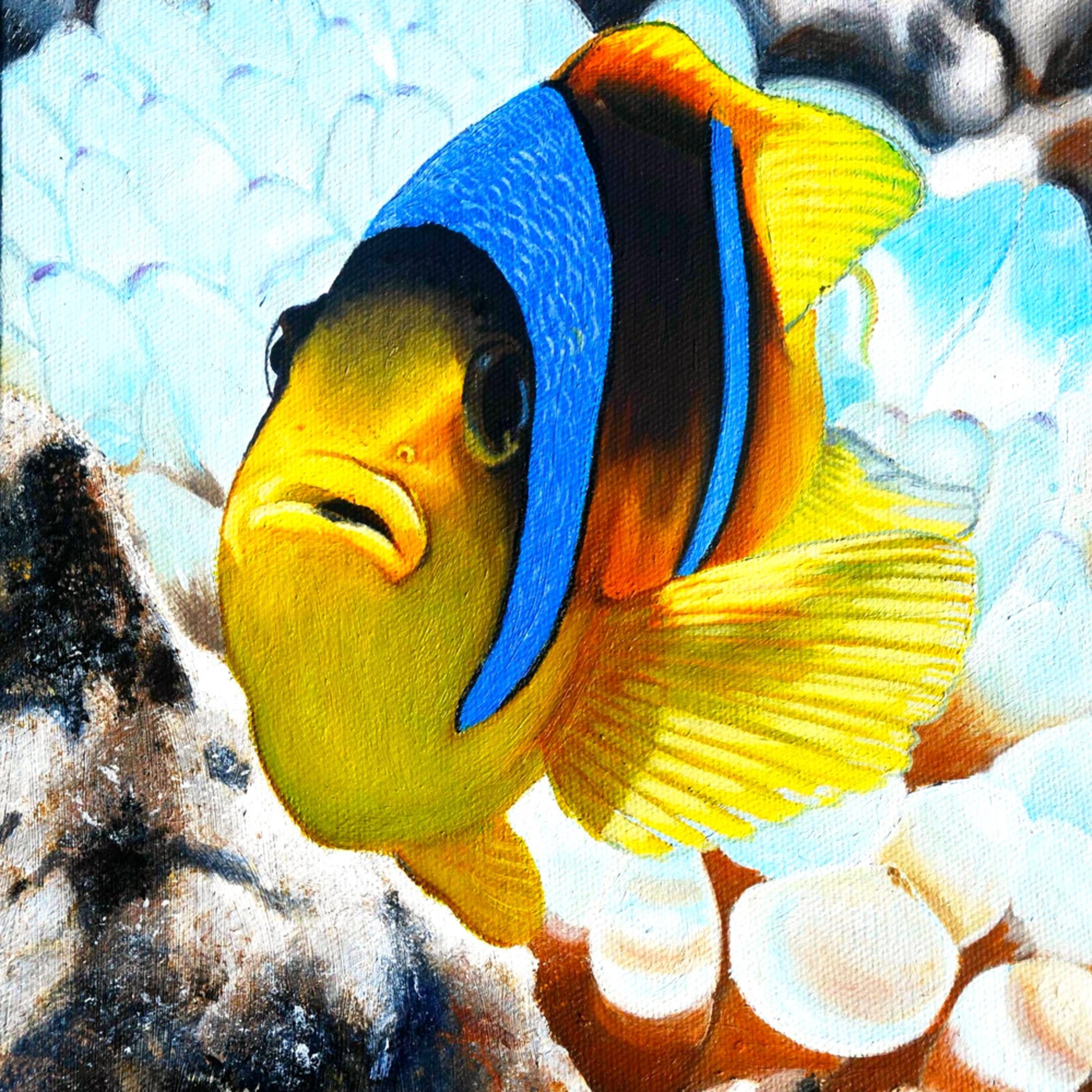 Akamai the clown fish jntago