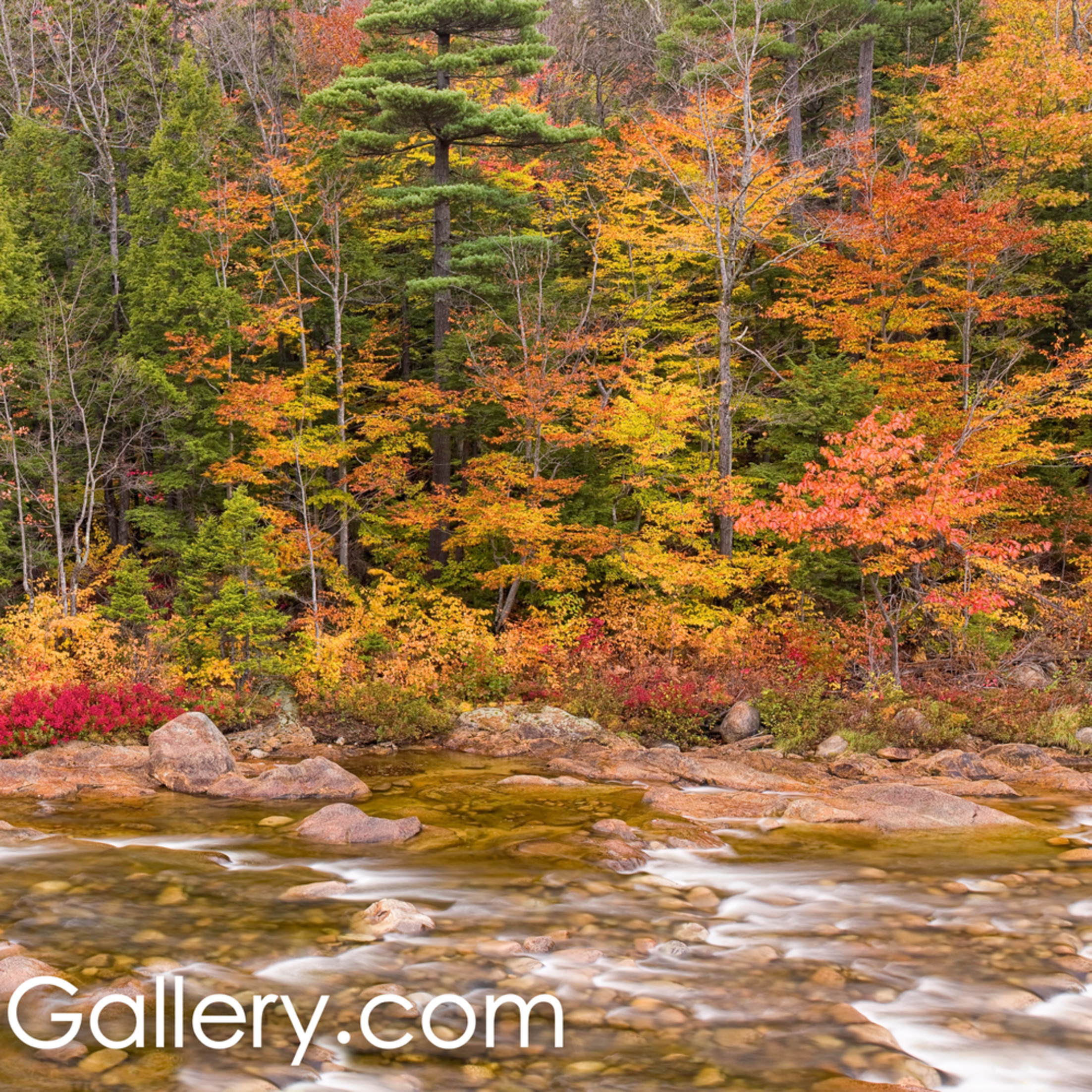 Autumn along the swift river dchu2o