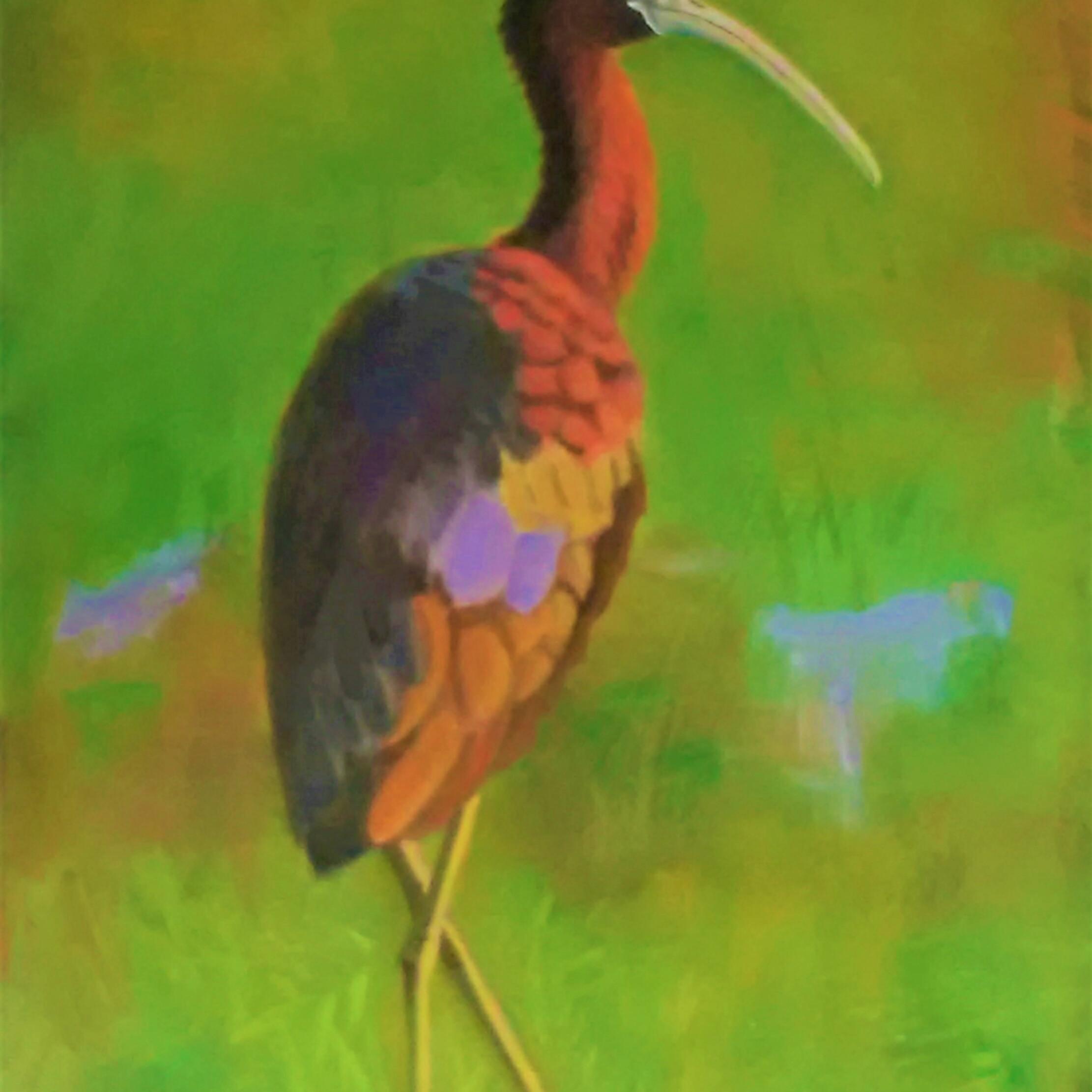 Glossy ibis qmq2oj