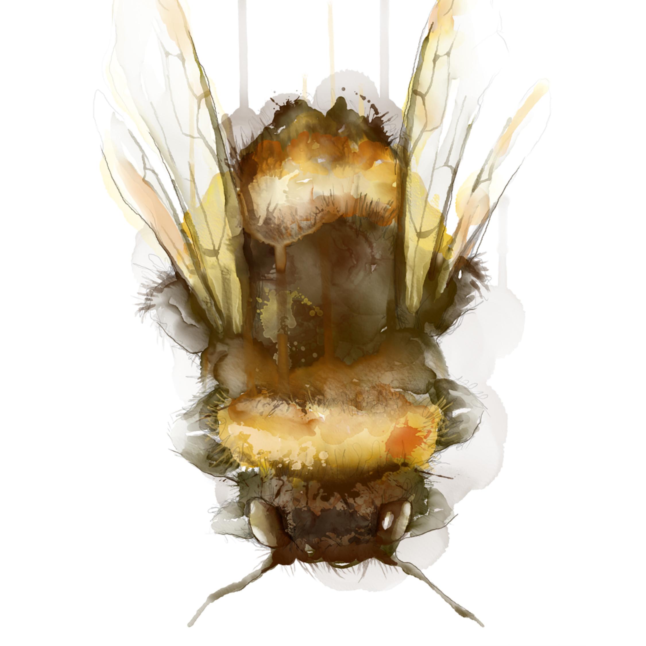 Bee watercolor reqyee