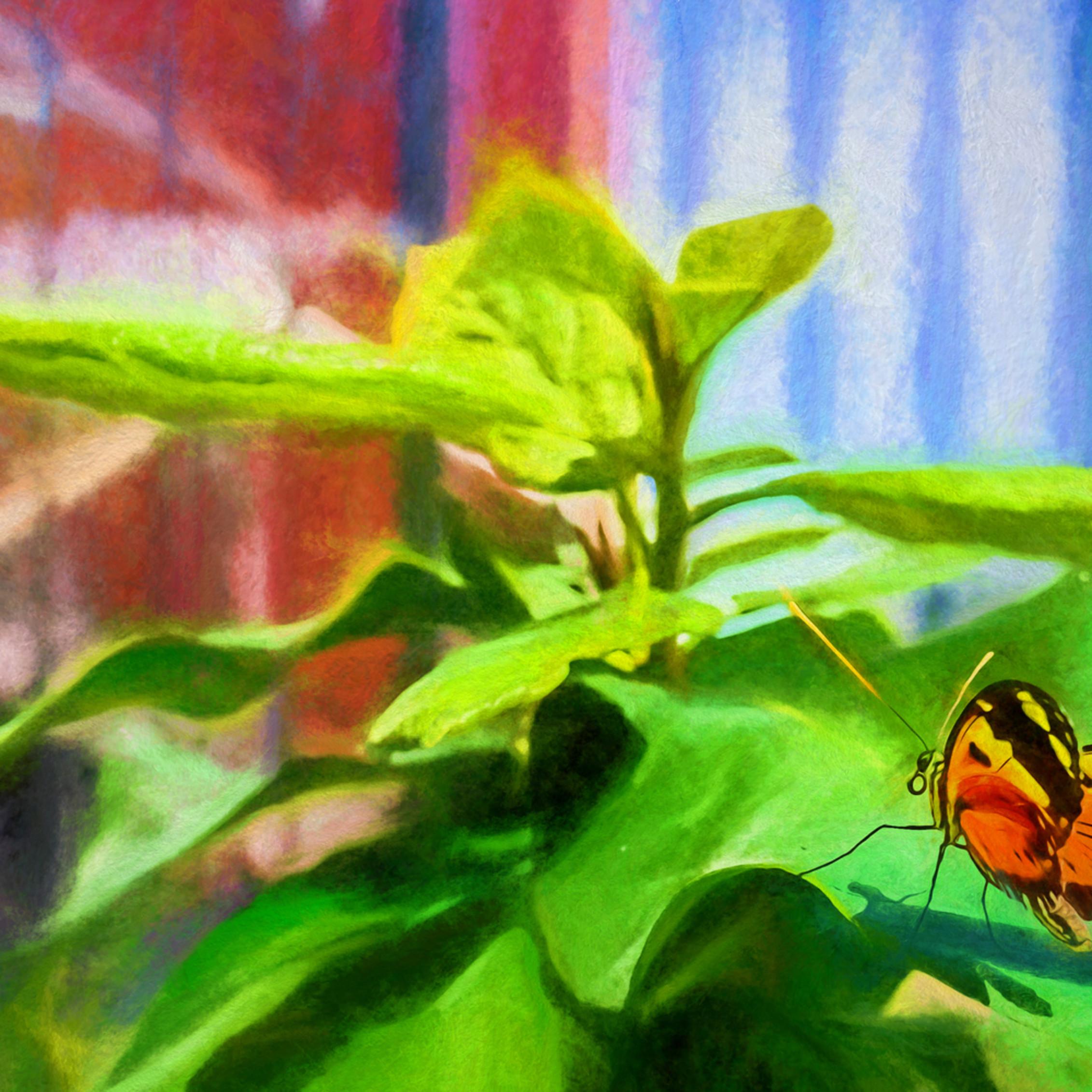 Butterfly2 i1b1jd