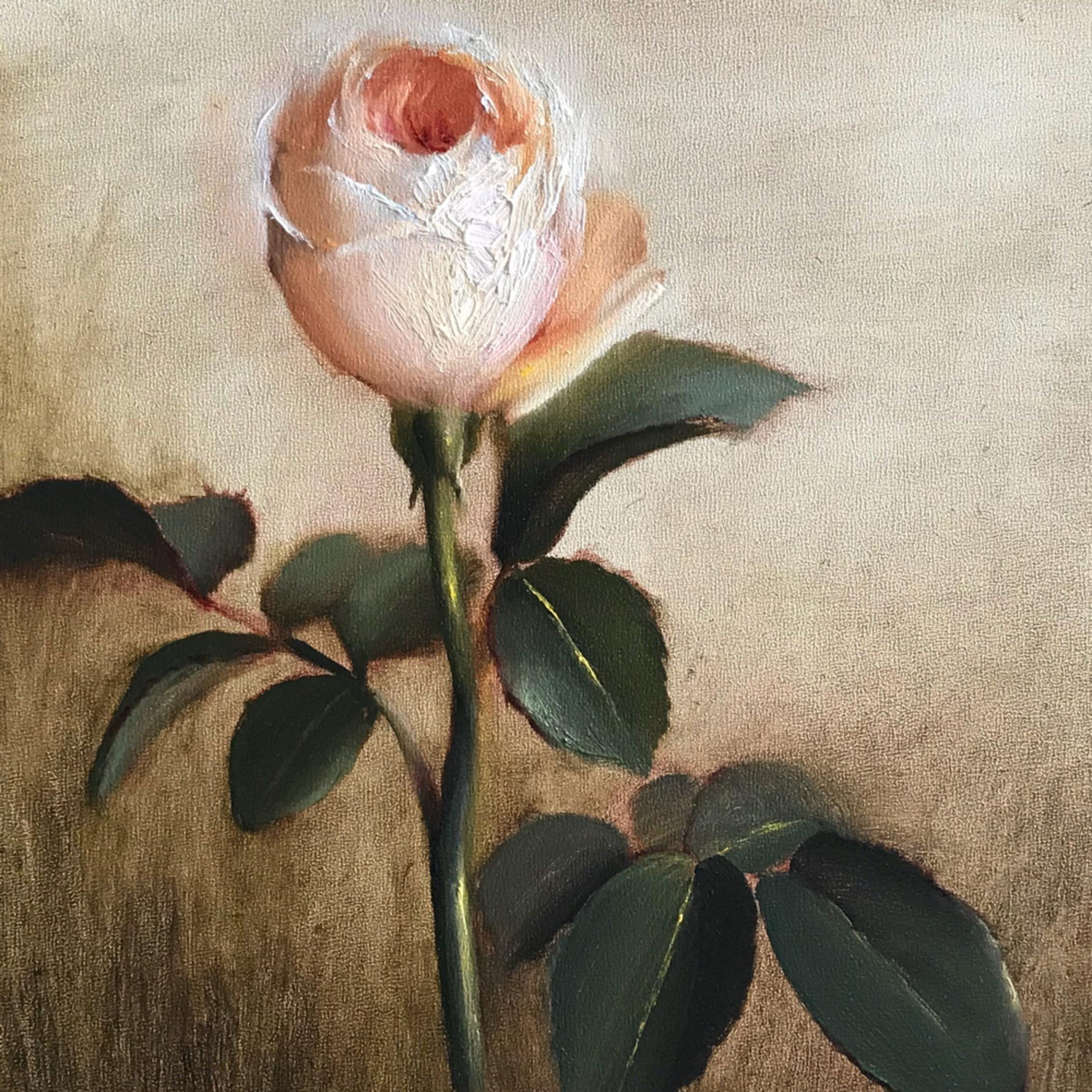 Rose1 m1wwrj