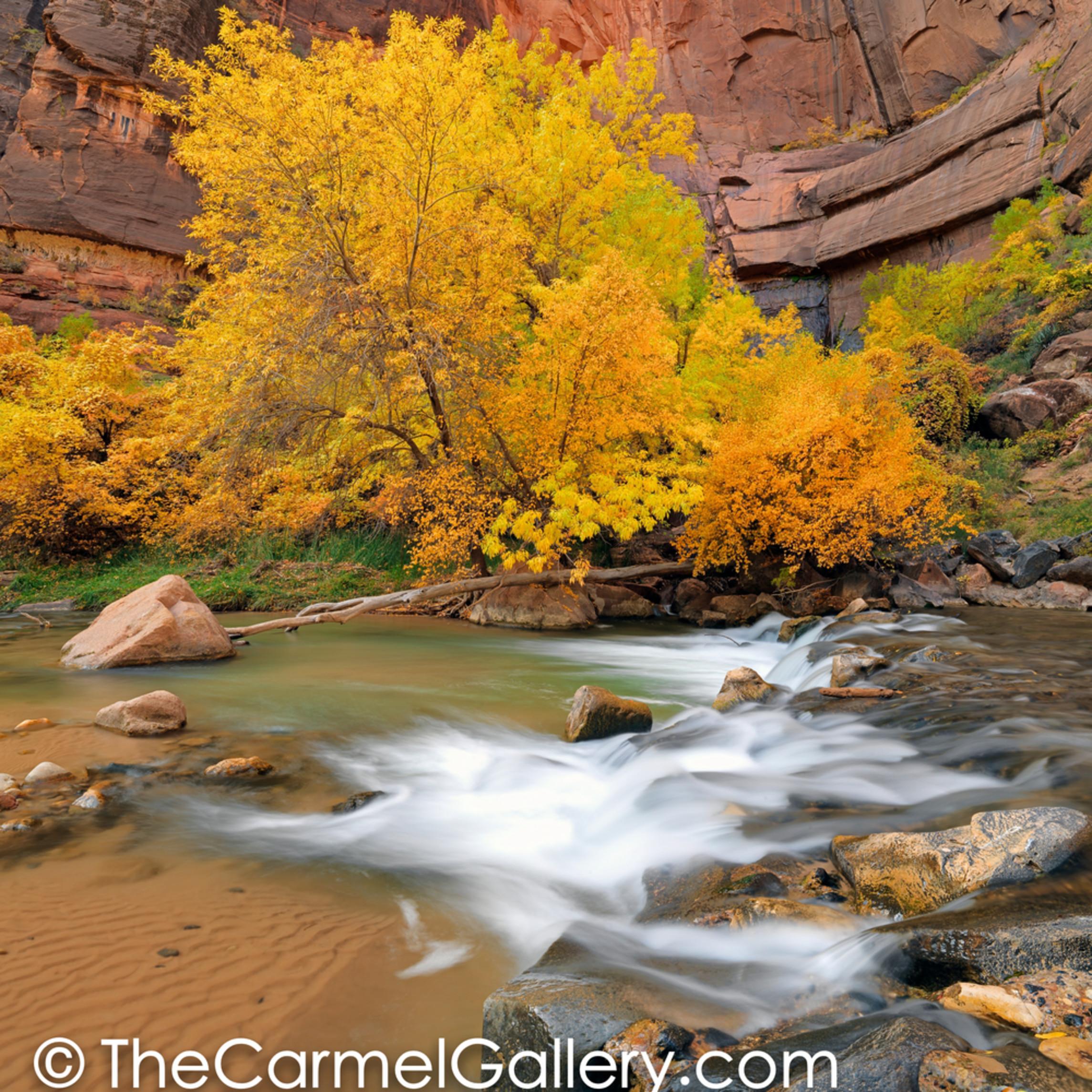 Autumn glow zion river eeffms