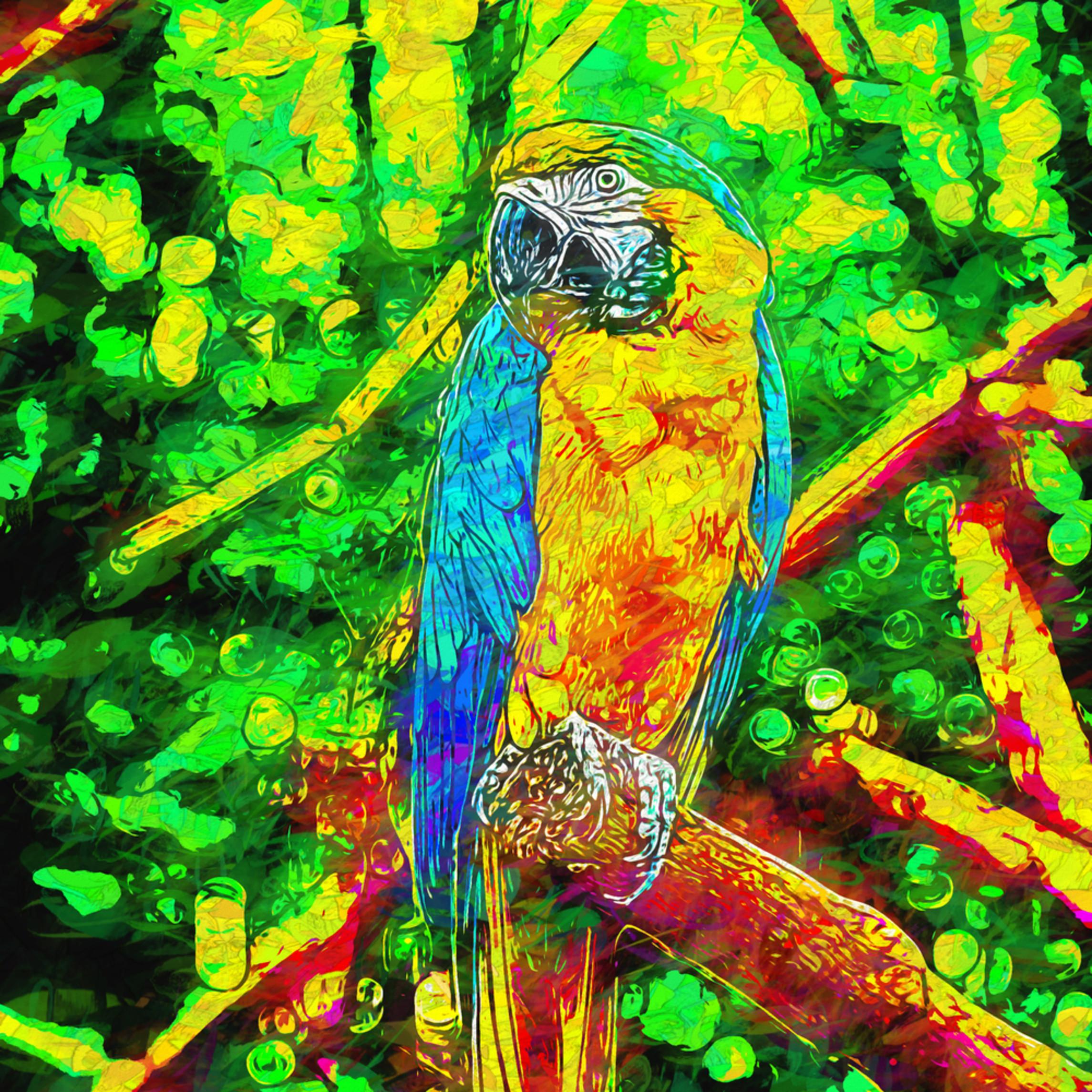 Papagaio2 vbnatk
