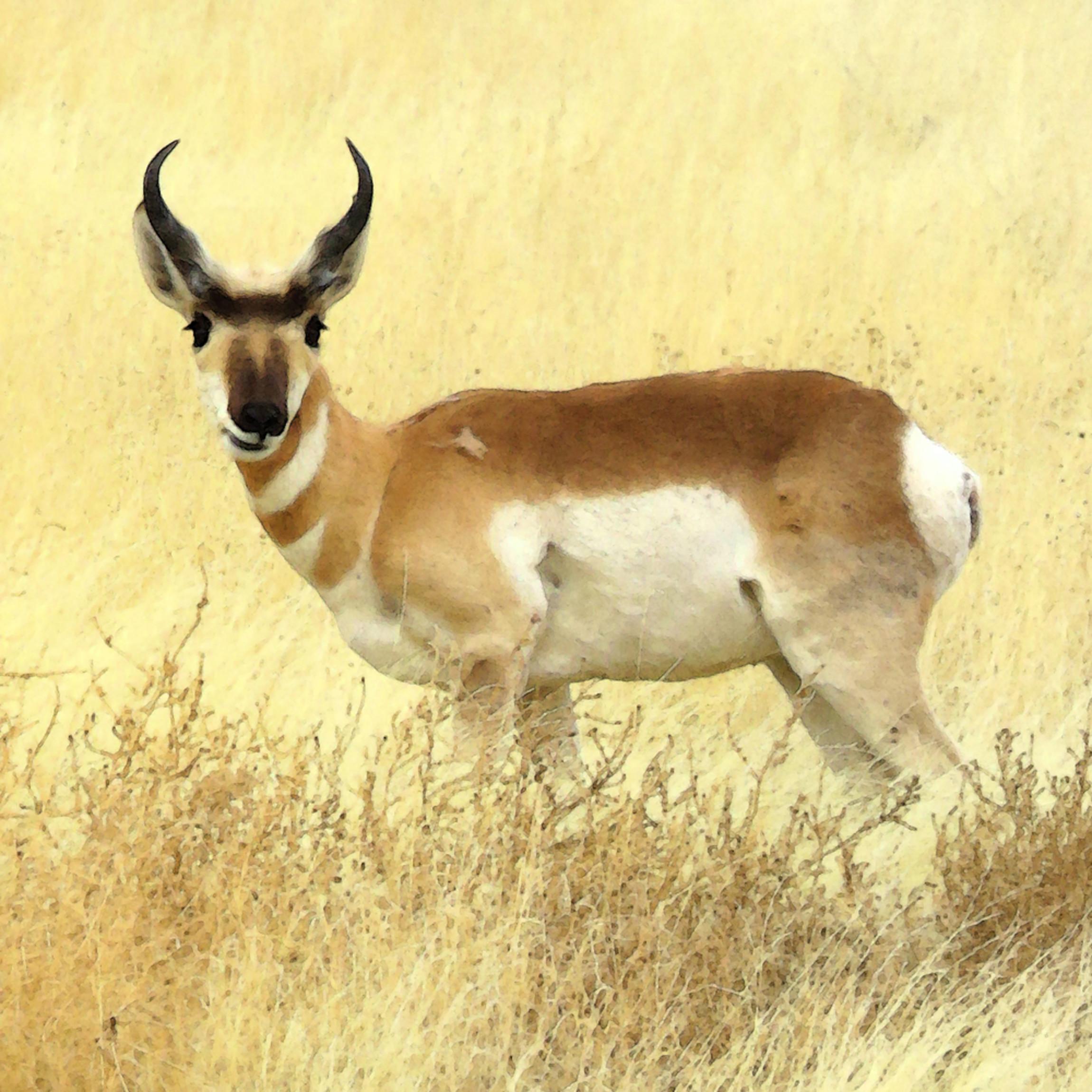 Img 0118 antelope prairie clo rztutx