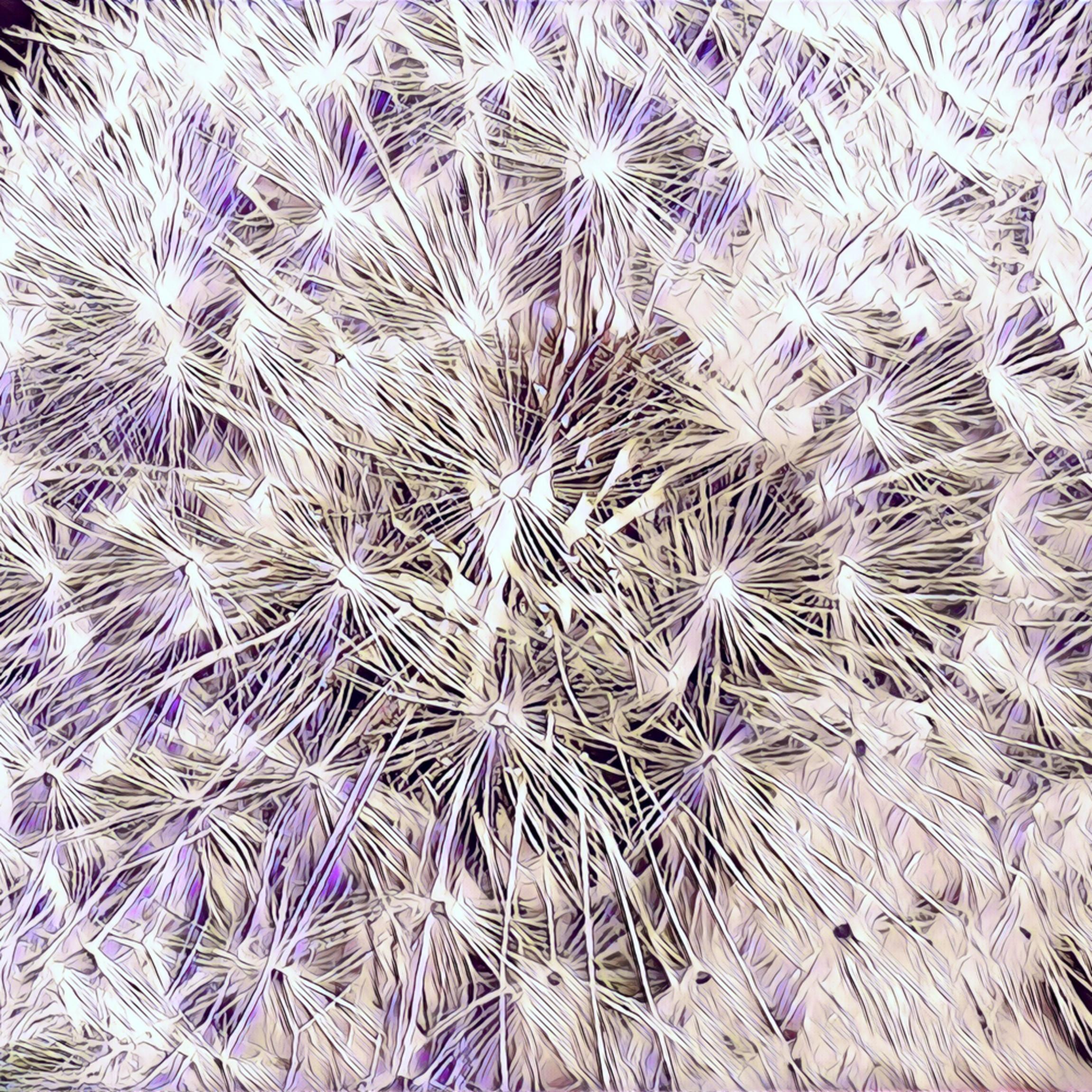 Dandelion fireworks lm4xhq