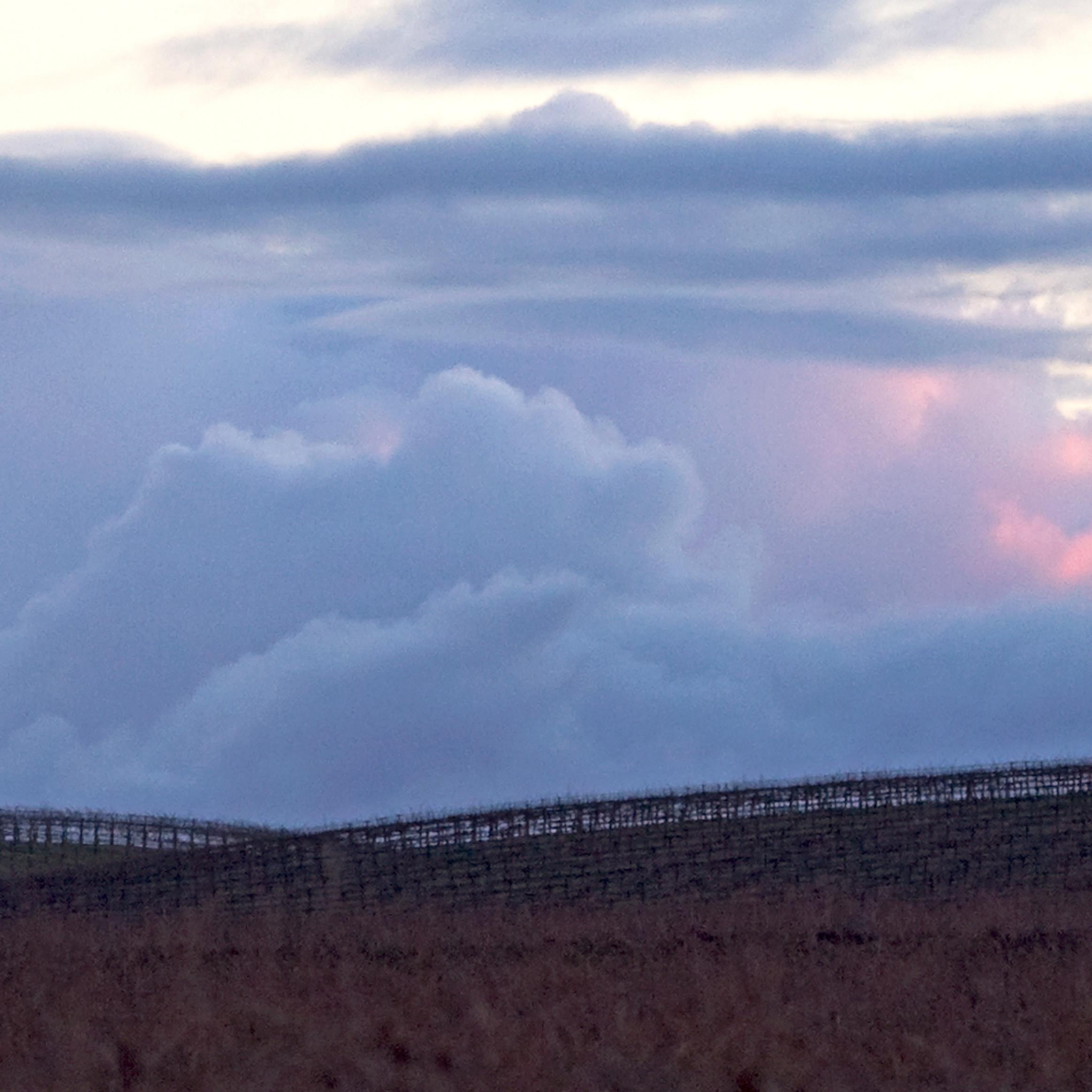 Vineyard sunset xg8gkv