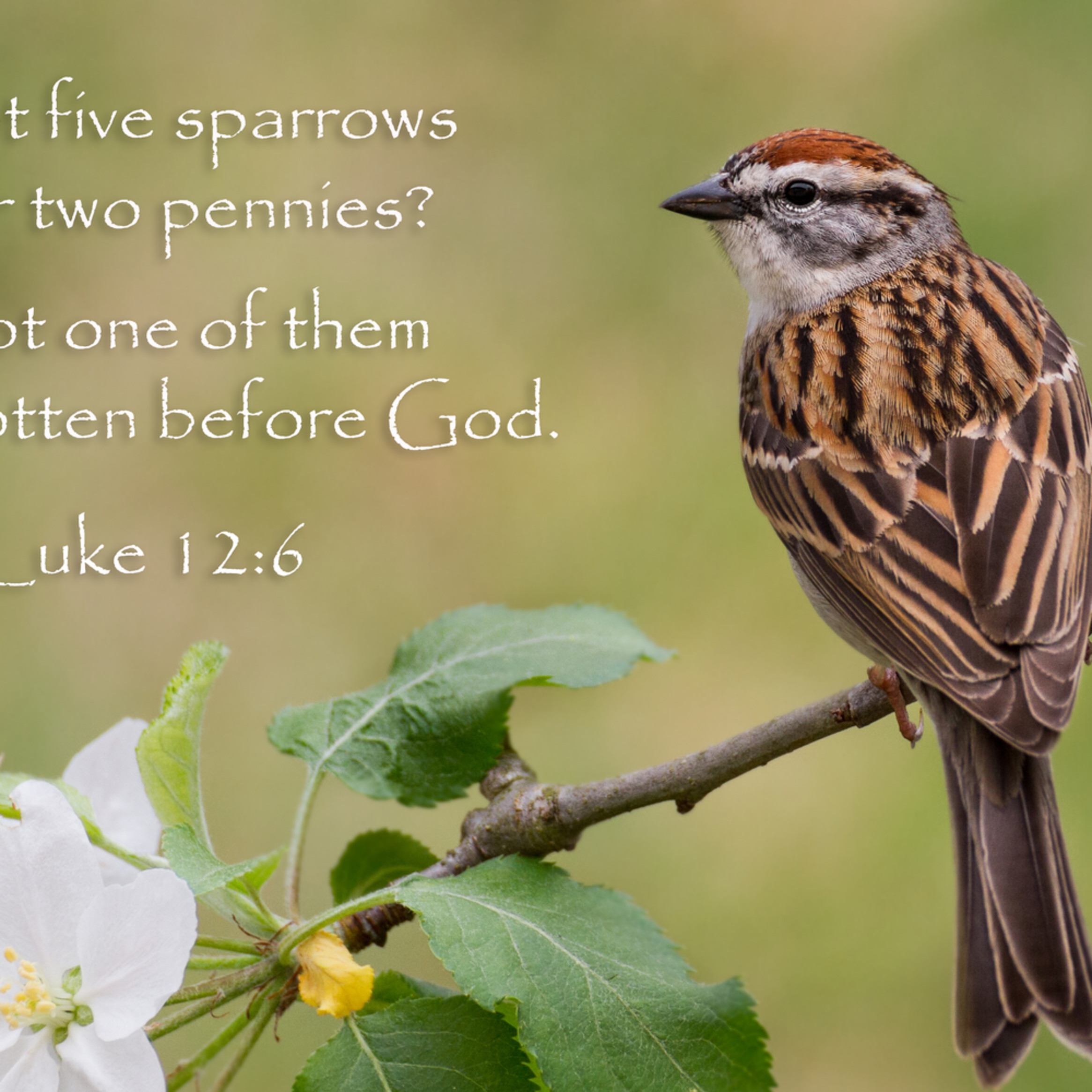 Sparrowverse  qta1ij
