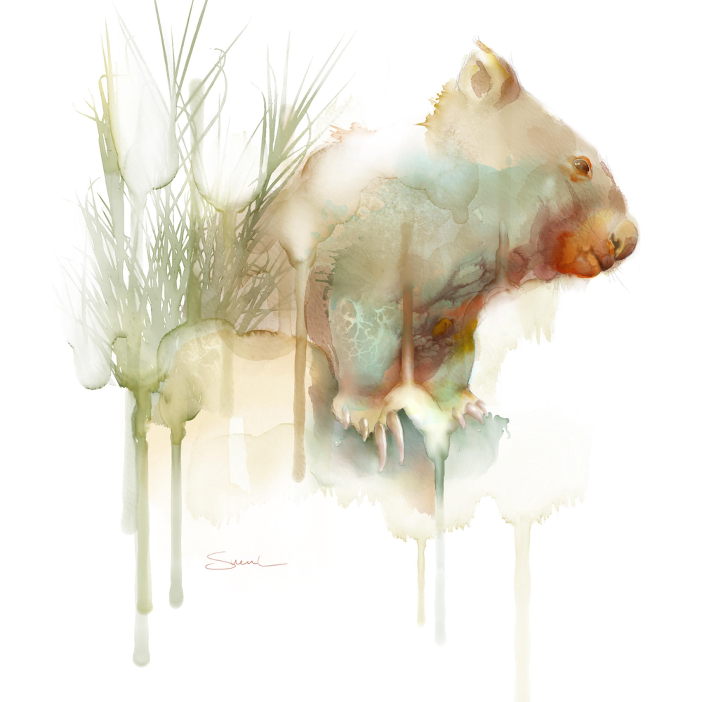 Wombat watercolor jaadkv