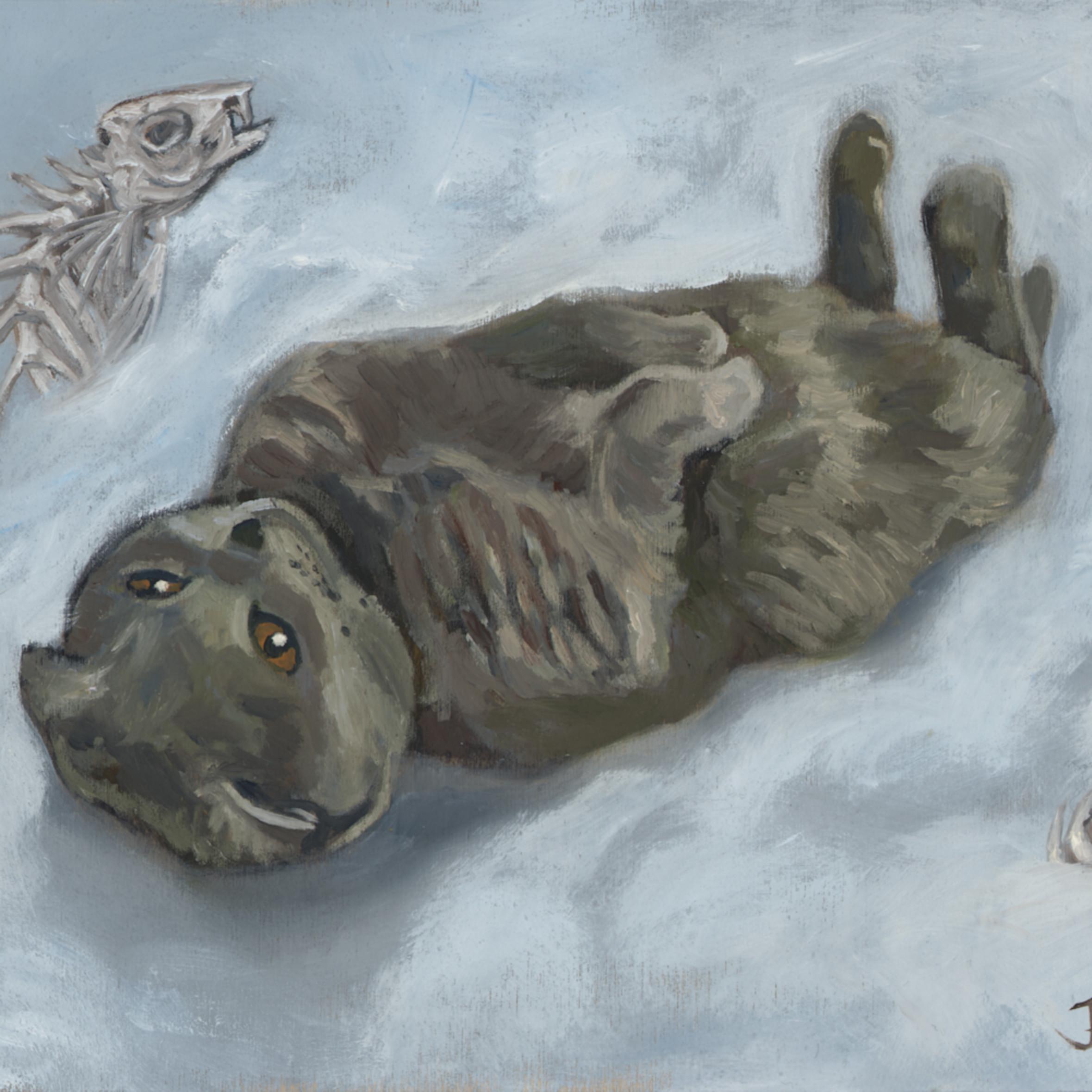 Dream kitty rgb xoen9v