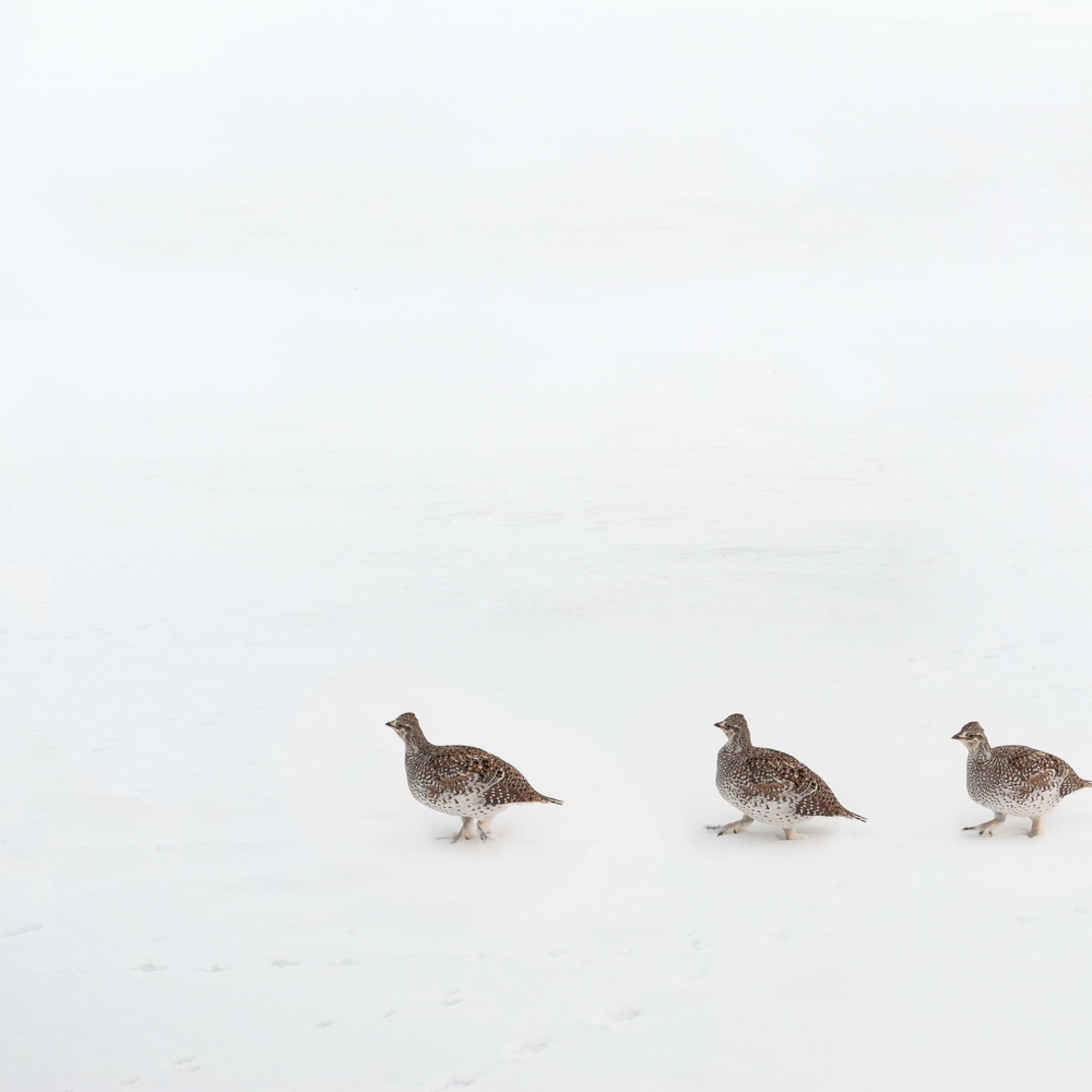 Pecking order h18y4o