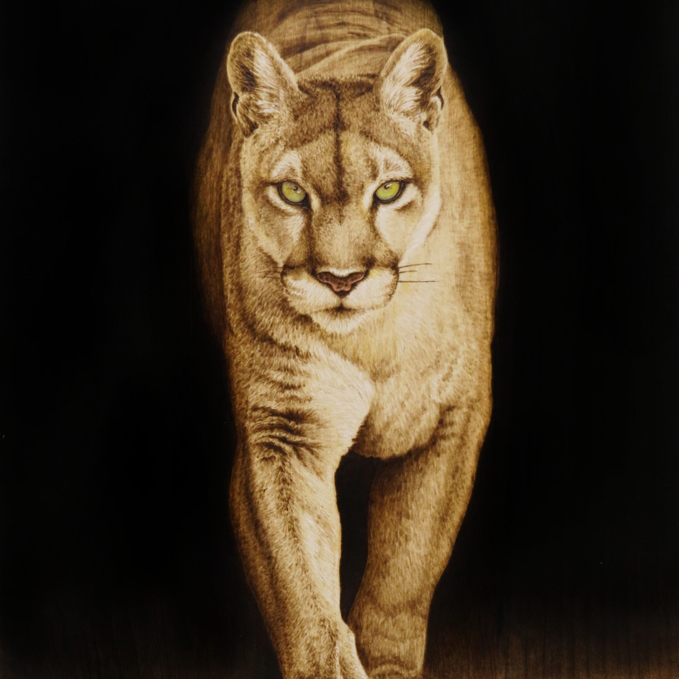 Mountain lion  final a88cvr