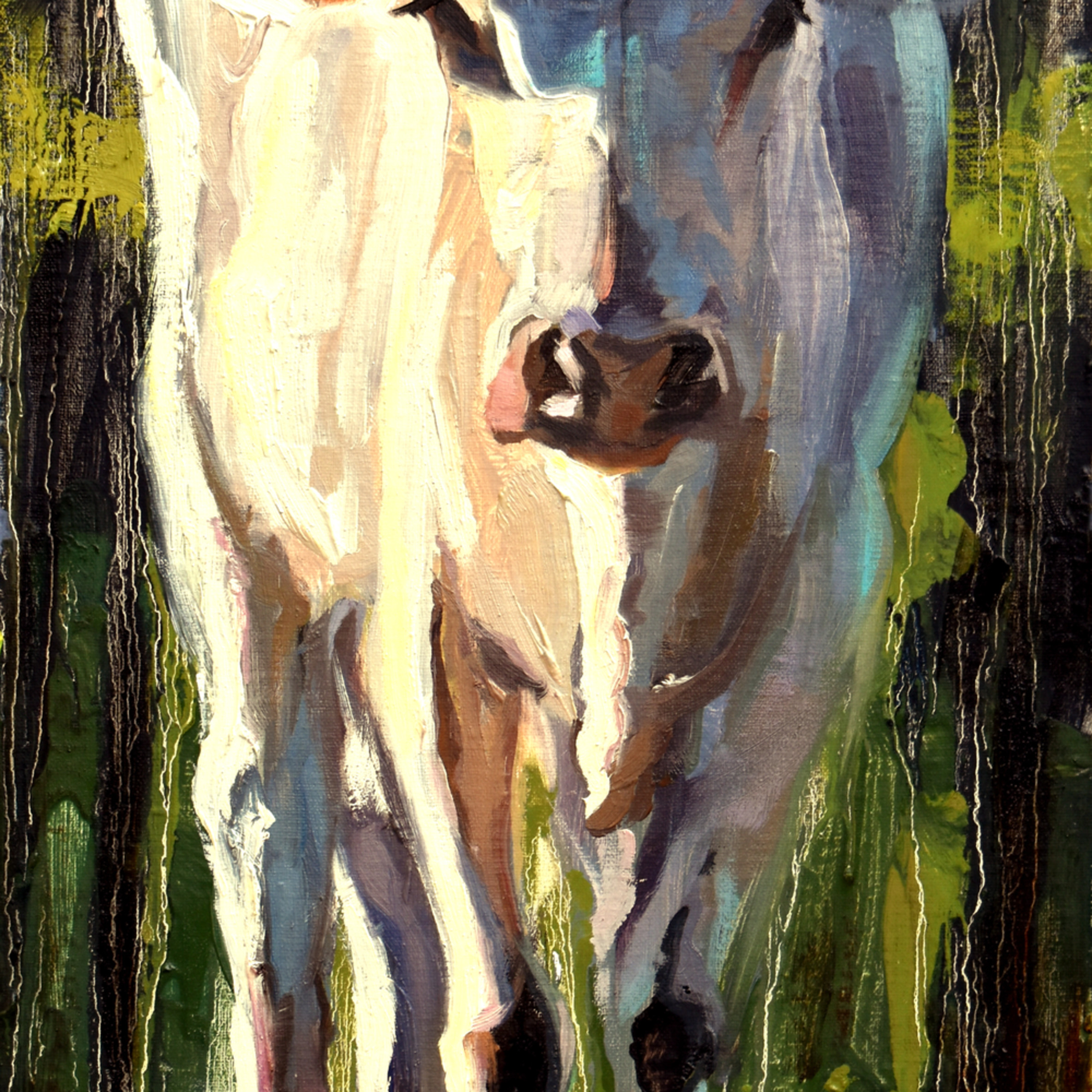 Bull calf 10x20 oil 2020 qhxth1