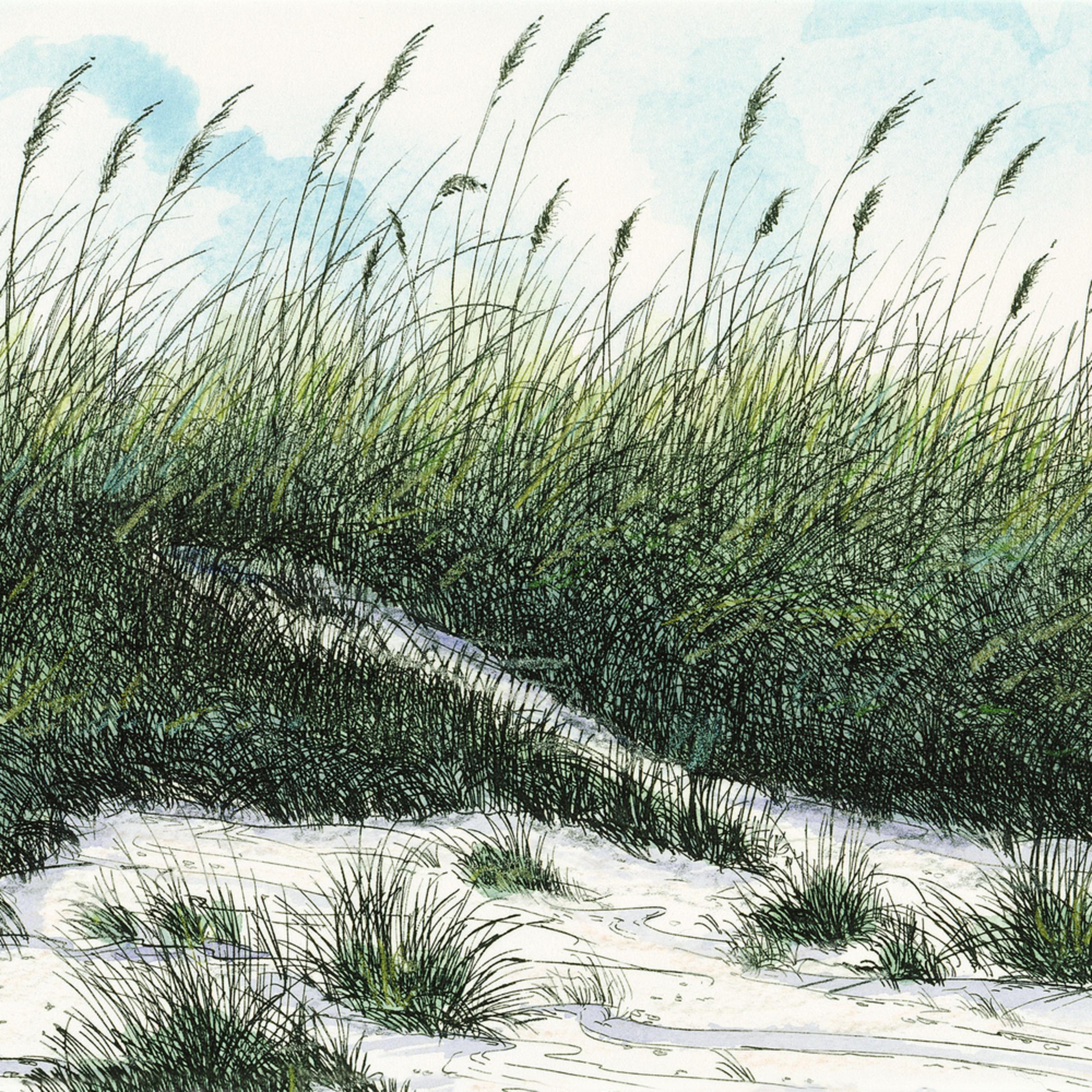 Carolina dunes 11x8 d0qbaf