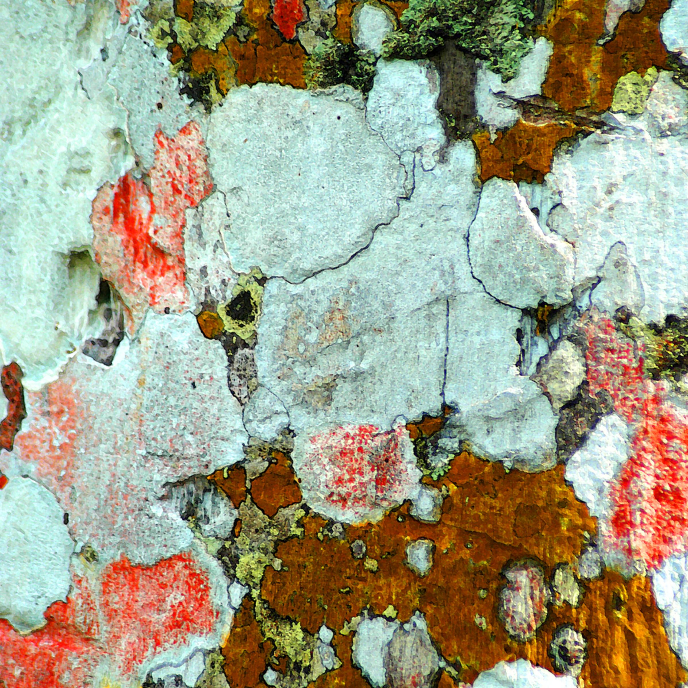 Lauree feldman   feld lichencuba hrnfk0